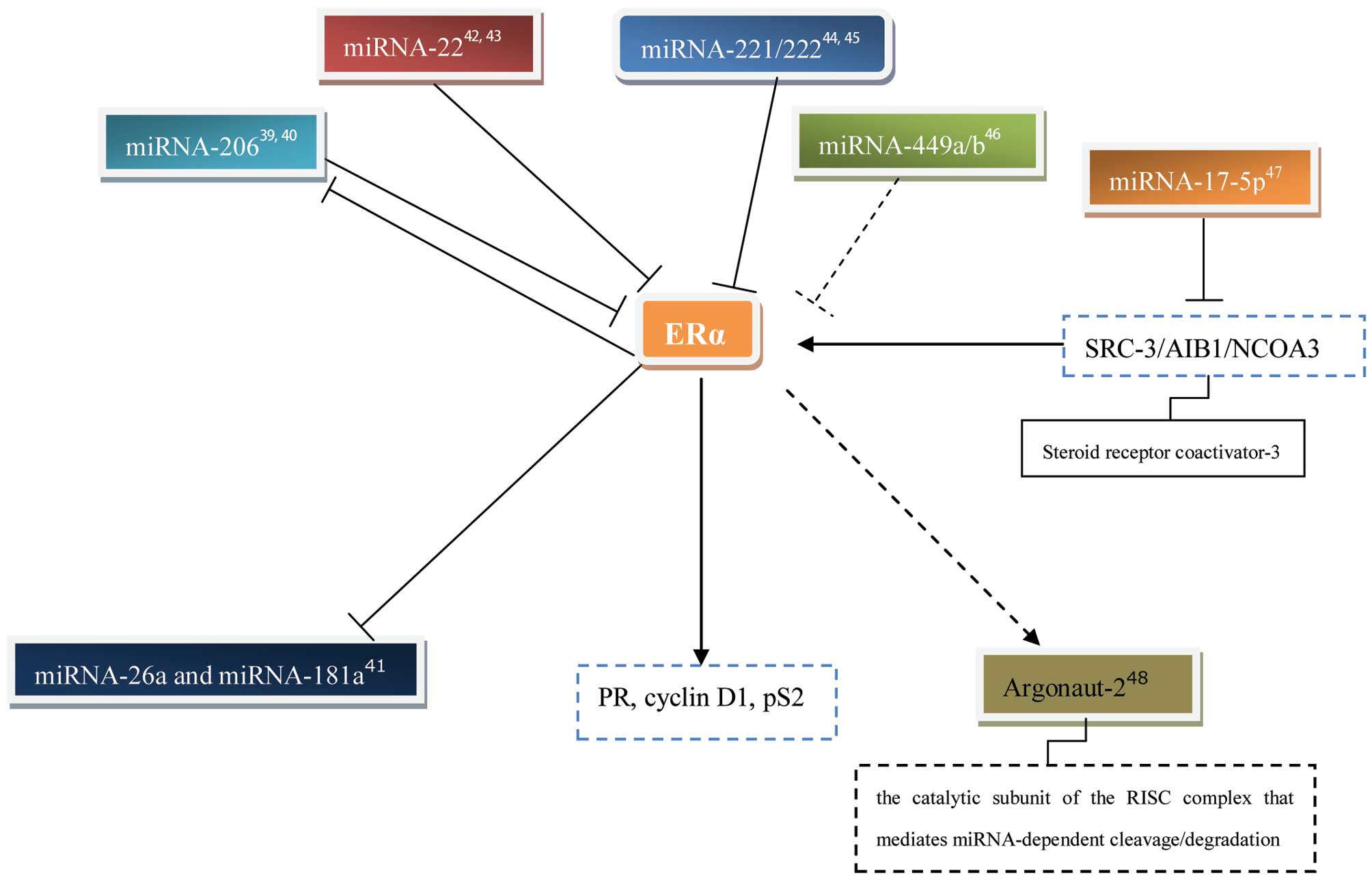 Tamoxifen resistance in breast cancer elucidating mechanisms of evolution