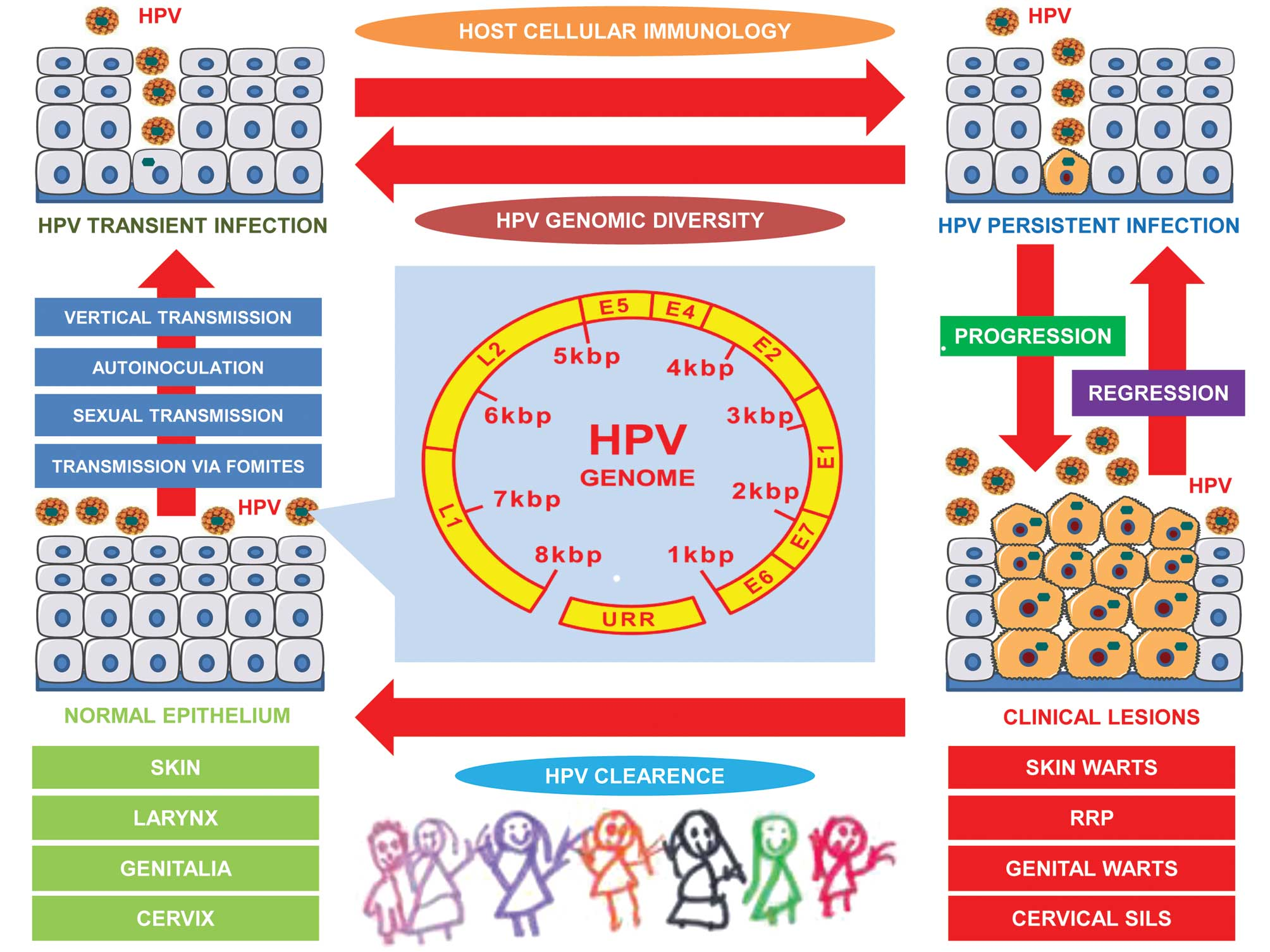 the paediatric story of human papillomavirus (review), Human Body