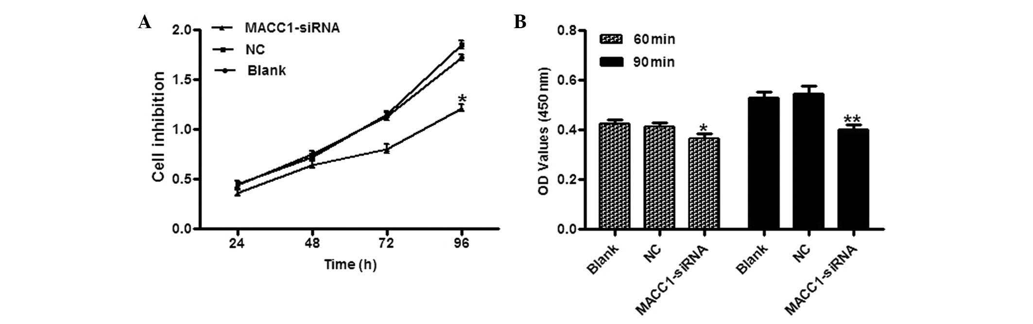 MACC1 induces metastasis in ovarian carcinoma by