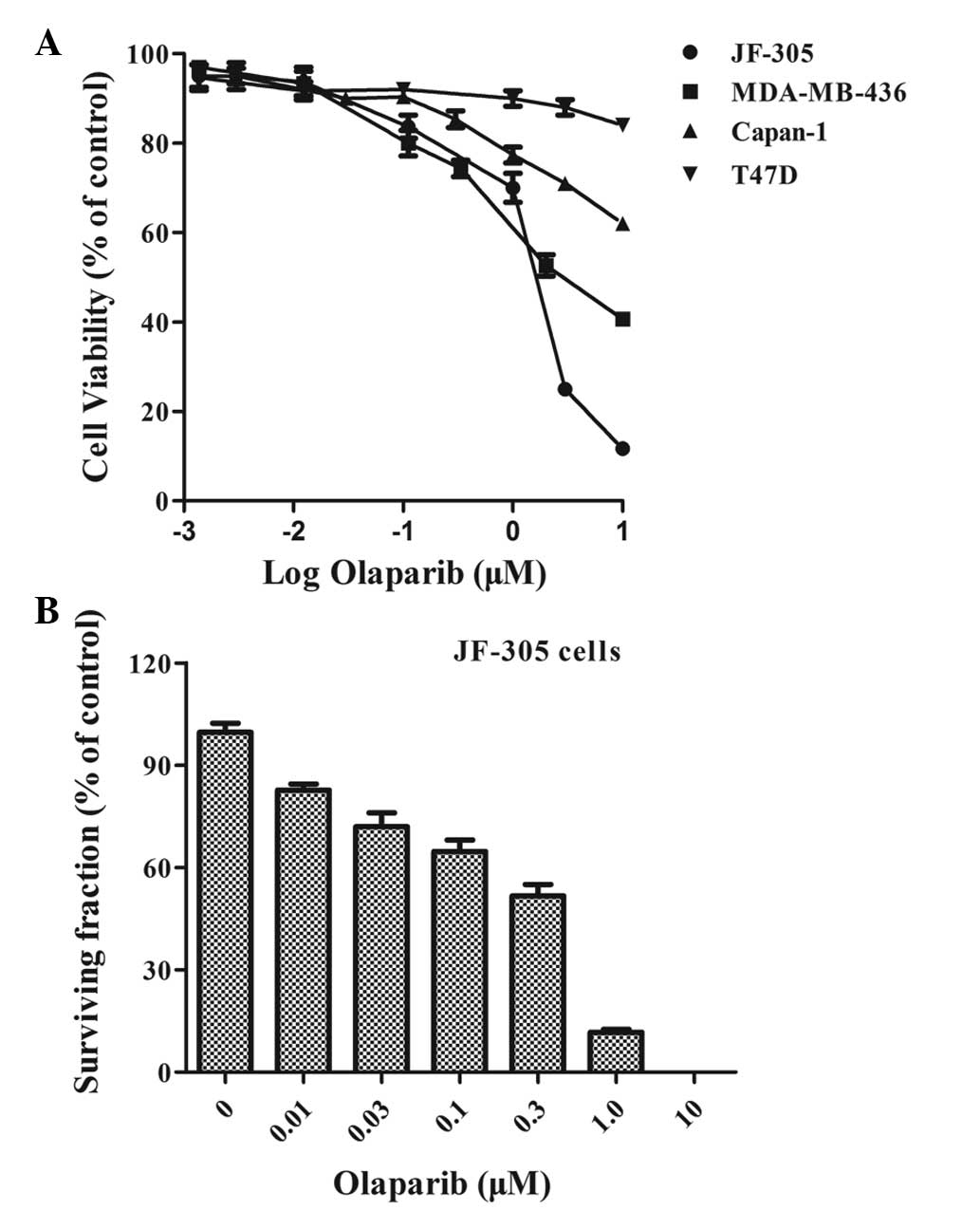 JF-305, a pancreatic cancer cell line is highly sensitive to the PARP inhibitor olaparib