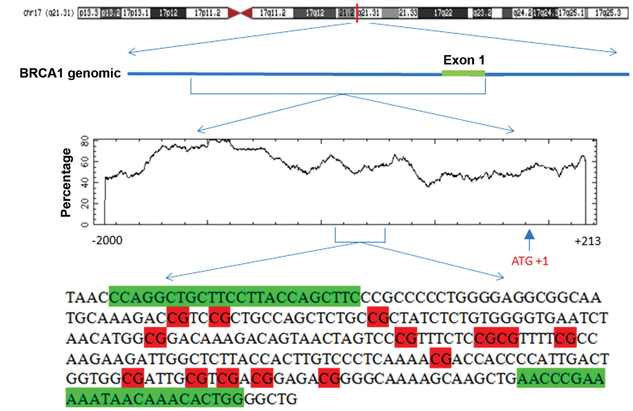 Brca1 And 2 Test