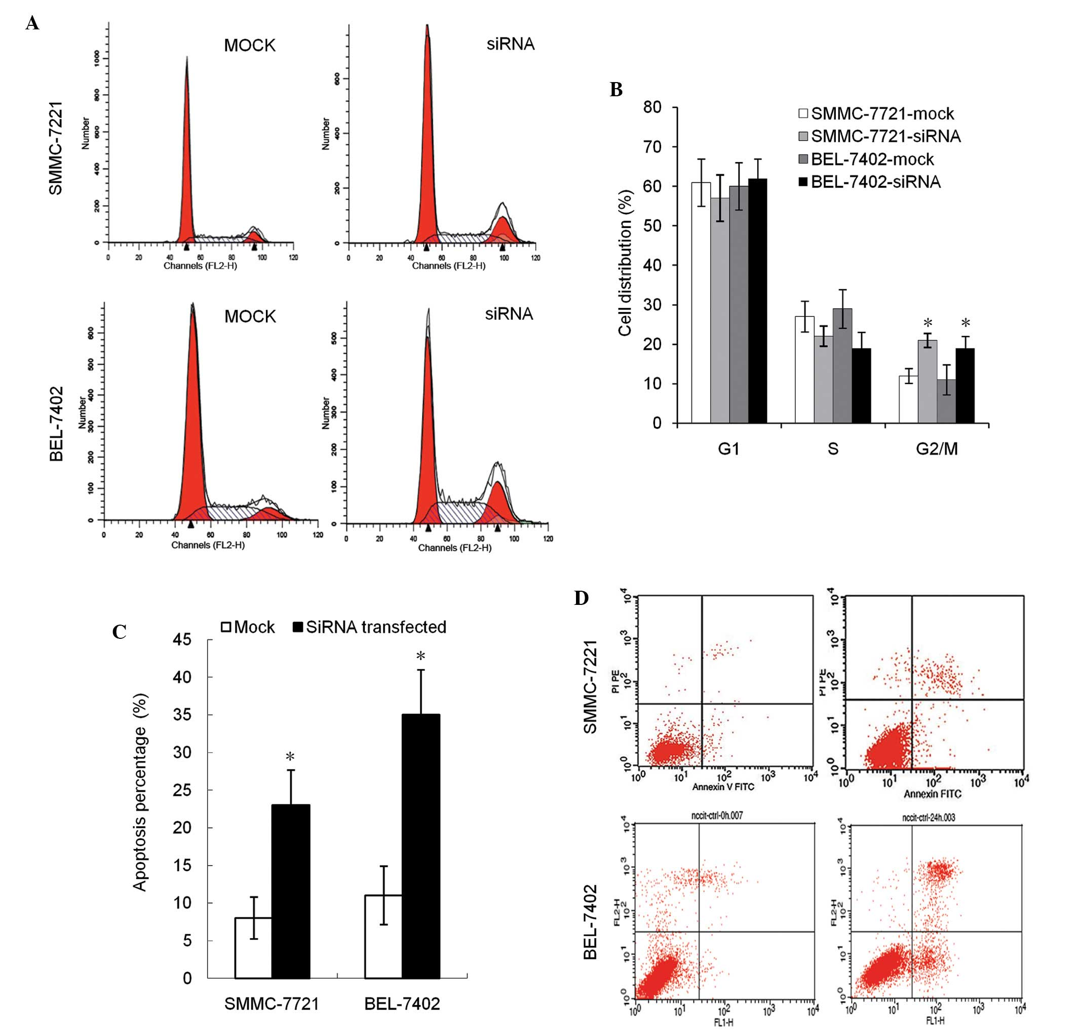 m6A methyltransferase METTL3 maintains colon cancer