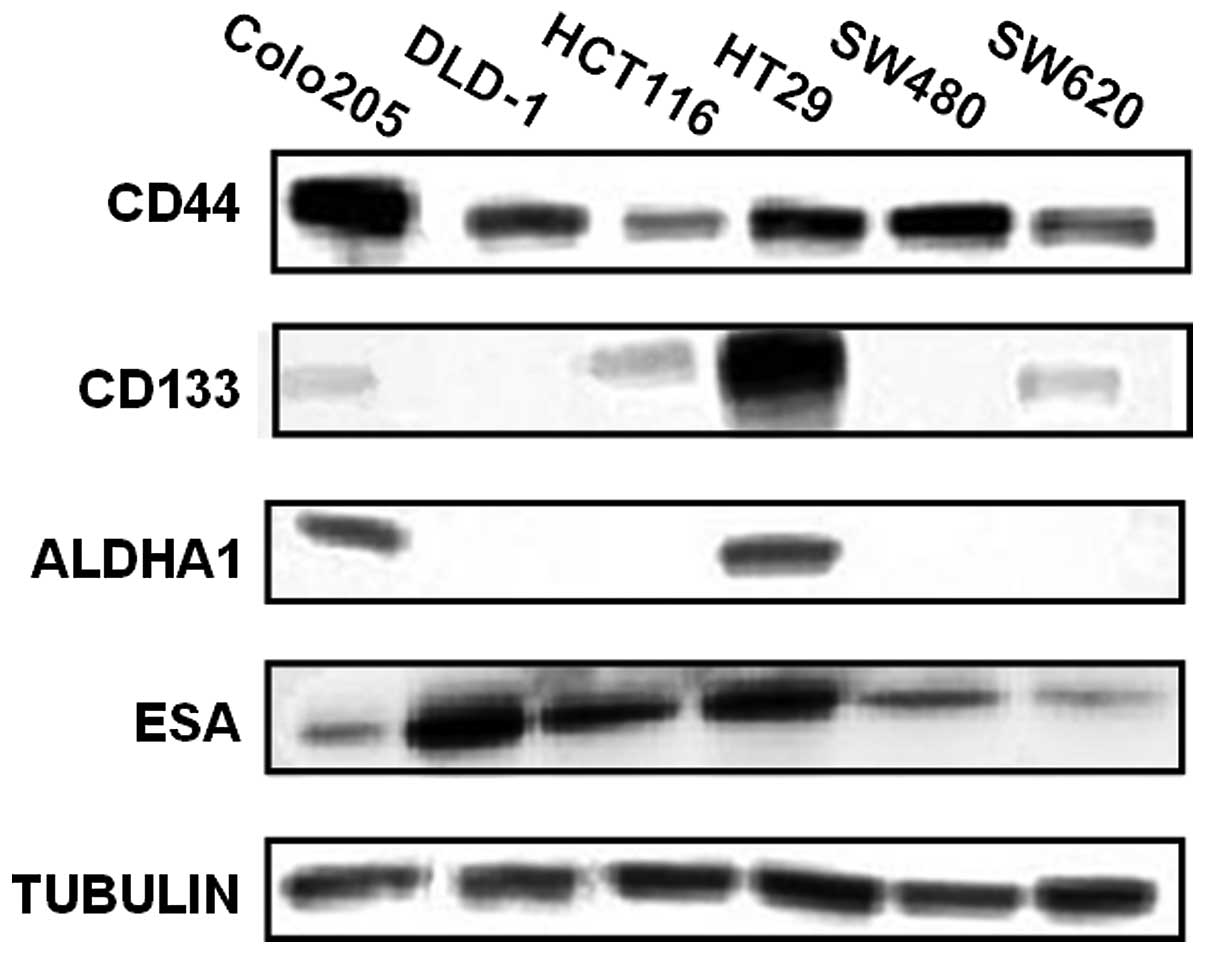 Evaluation Of Cd44 And Cd133 As Cancer Stem Cell Markers For Colorectal Cancer