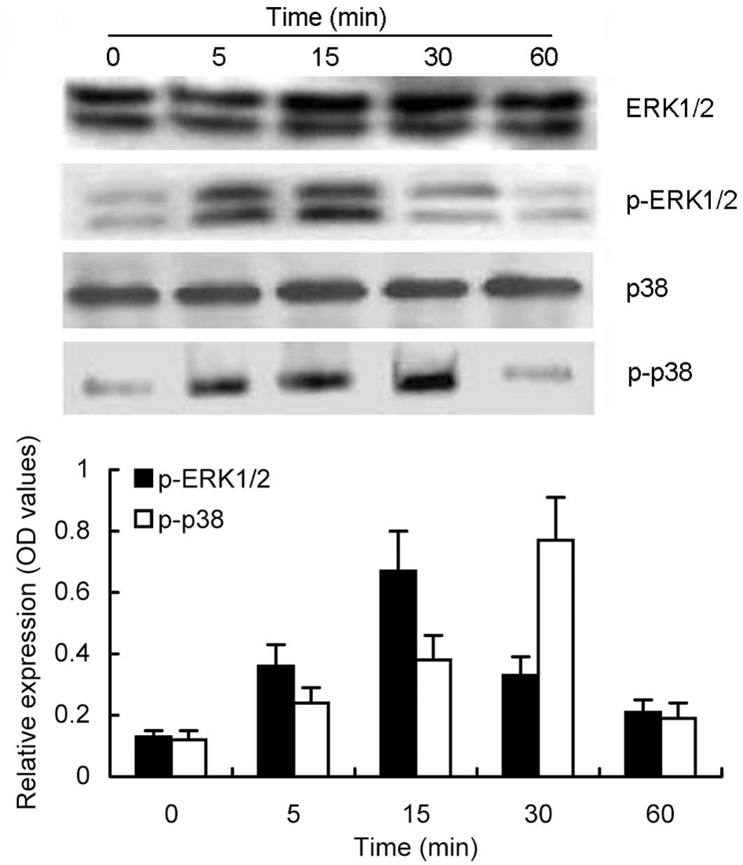 Protease-activated receptor-2 induces expression of vascular