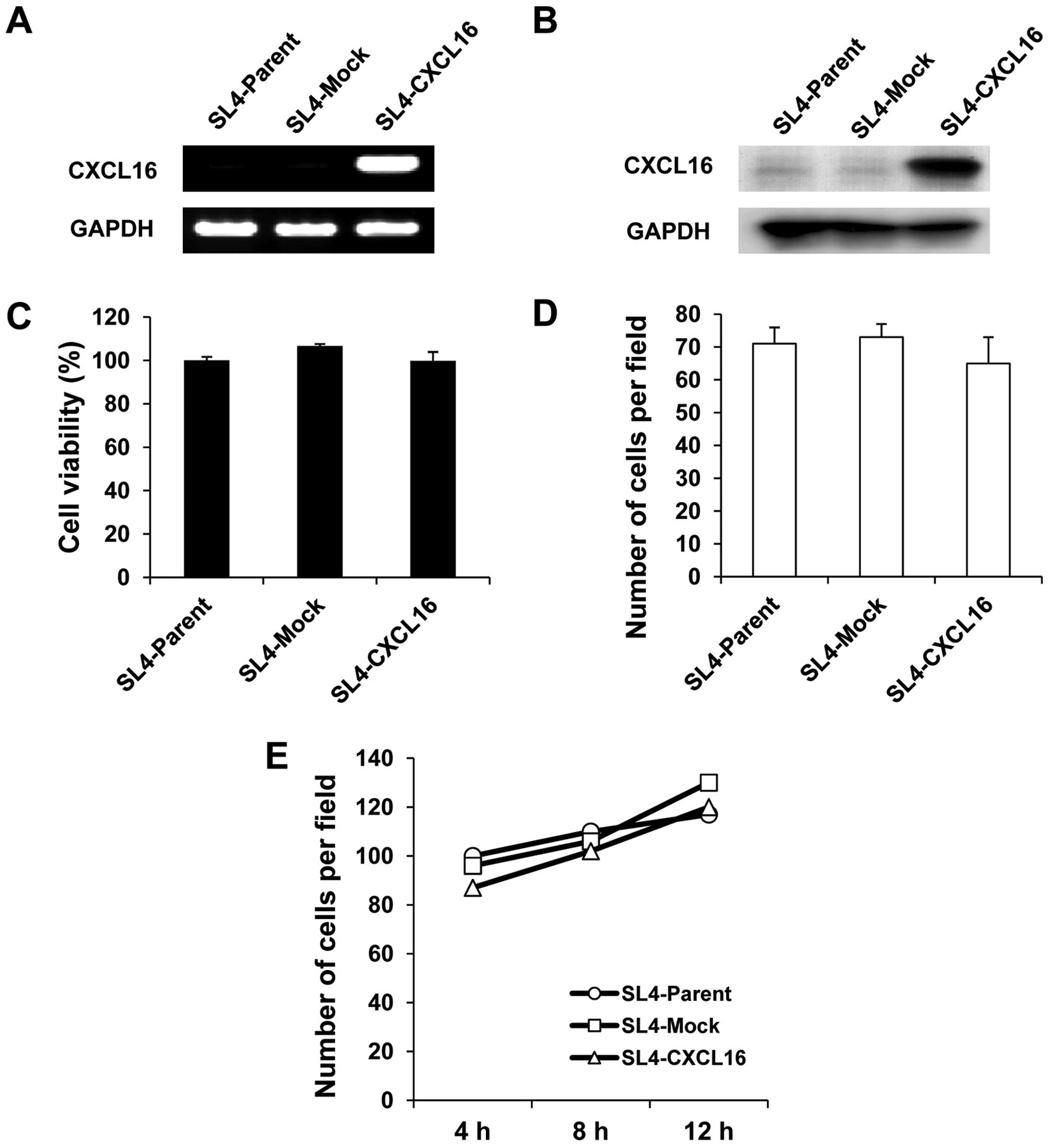 Chemokine Cxcl16 Suppresses Liver Metastasis Of Colorectal Cancer Via Augmentation Of Tumor Infiltrating Natural Killer T Cells In A Murine Model