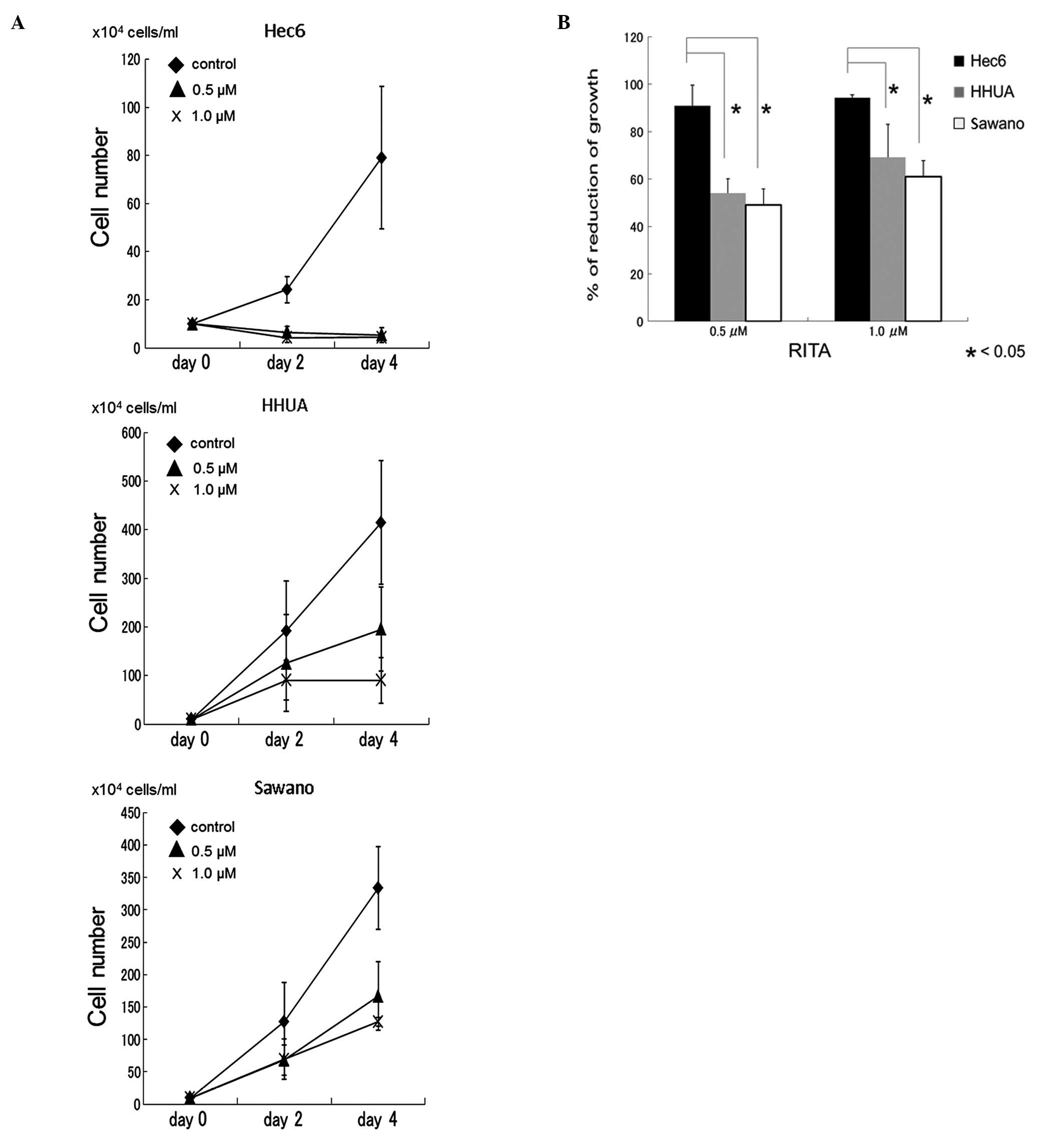 Association of mdm2 snp309 and tp53 arg72pro polymorphisms with growth inhibitory effects of rita on endometrial cancer cell lines a treatment with rita inhibited cell growth in endometrial cancer cell lines buycottarizona