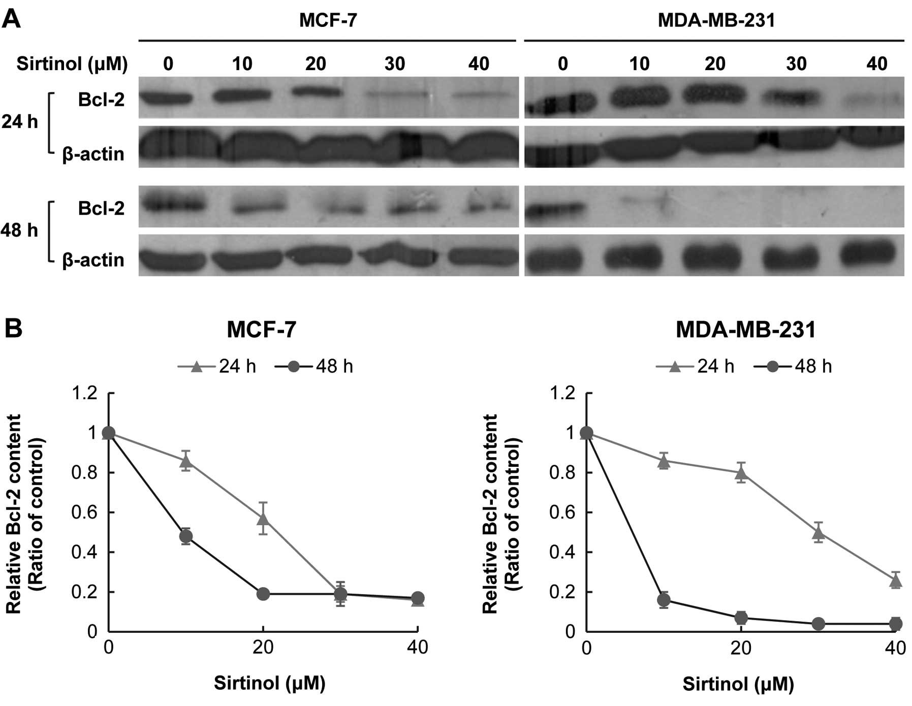 Expression Of The Bcl 2 Protein In Sirtinol Treated Human T Cancer Cell Lines A Mcf 7 And B Mda Mb 231 Cells Were Cultured For Indicated