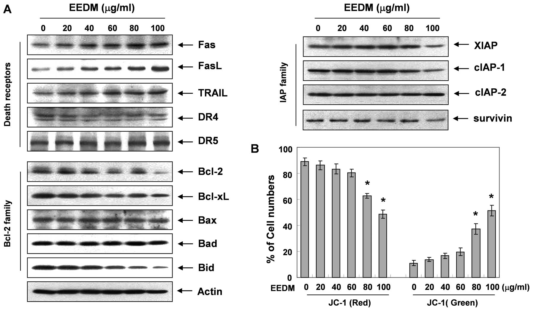 Induction Of Human Leukemia U937 Cell Apoptosis By An