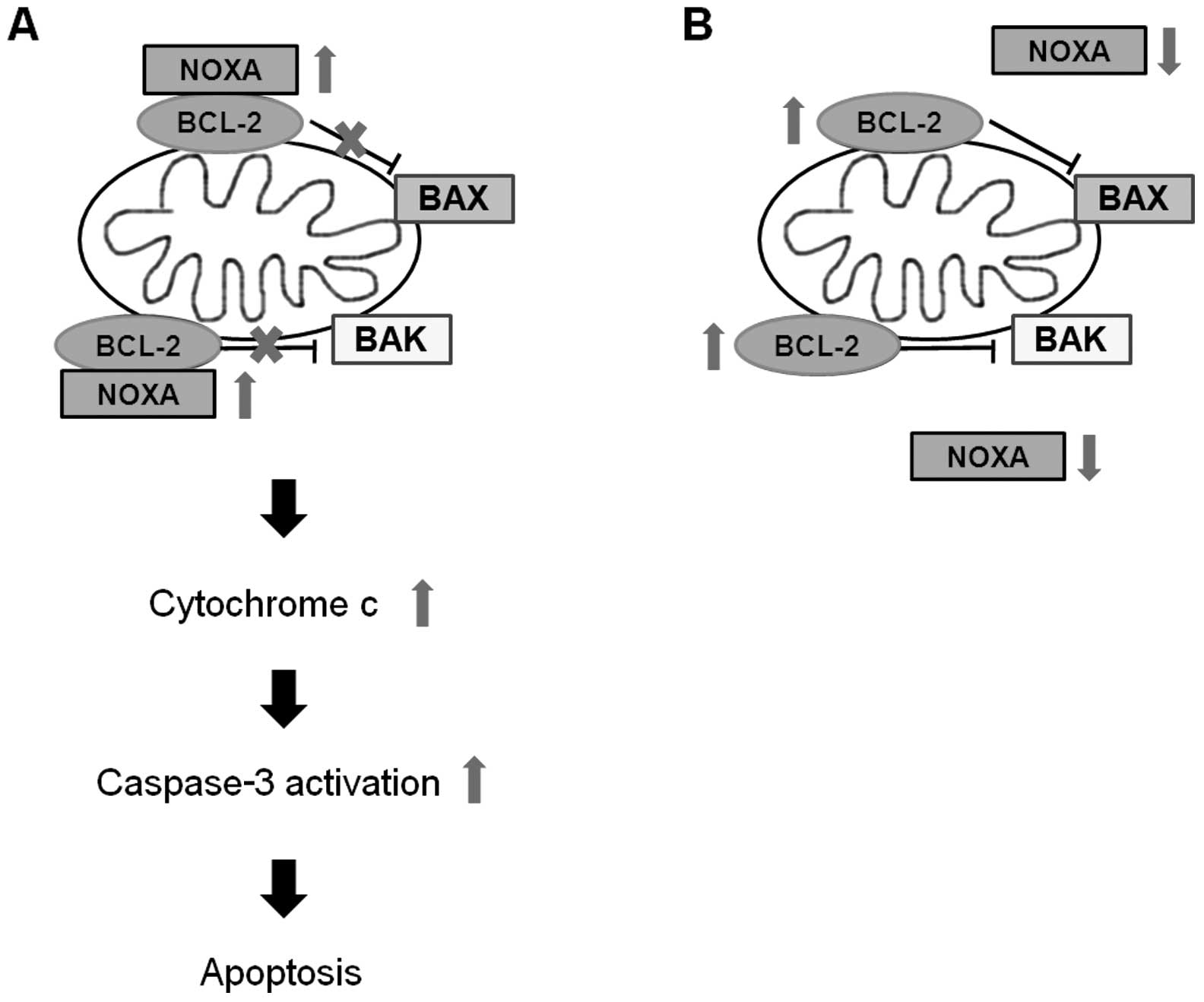 effects of the monoamine oxidase inhibitors pargyline and
