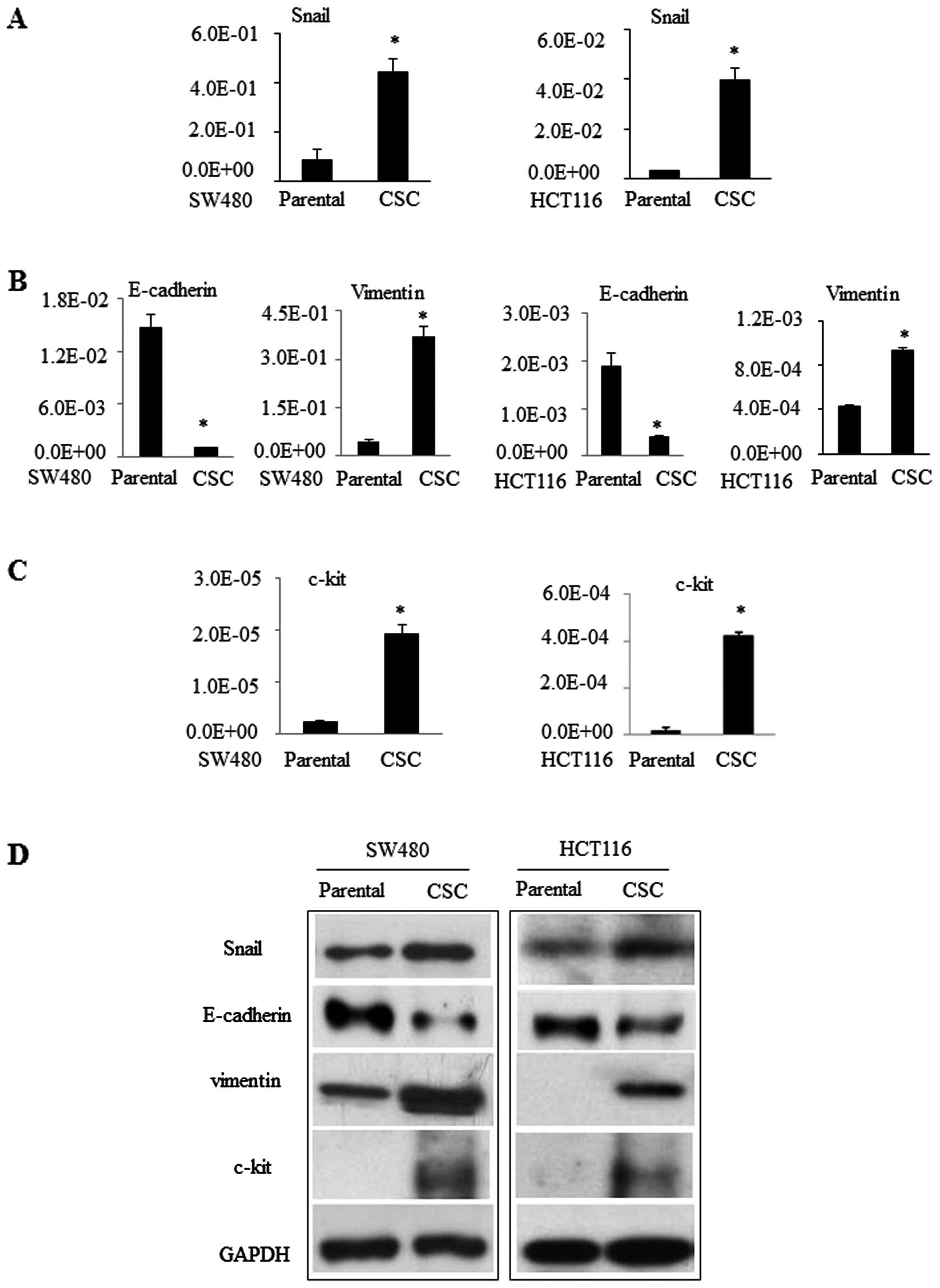 Inhibition Of The Transcription Factor Sp1 Suppresses Colon Cancer Stem Cell Growth And Induces Apoptosis In Vitro And In Nude Mouse Xenografts
