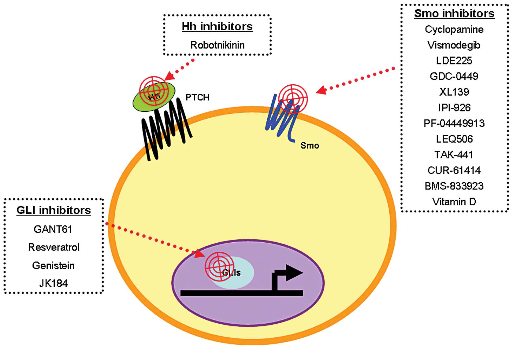 Role Of The Hedgehog Pathway In Hepatocellular Carcinoma