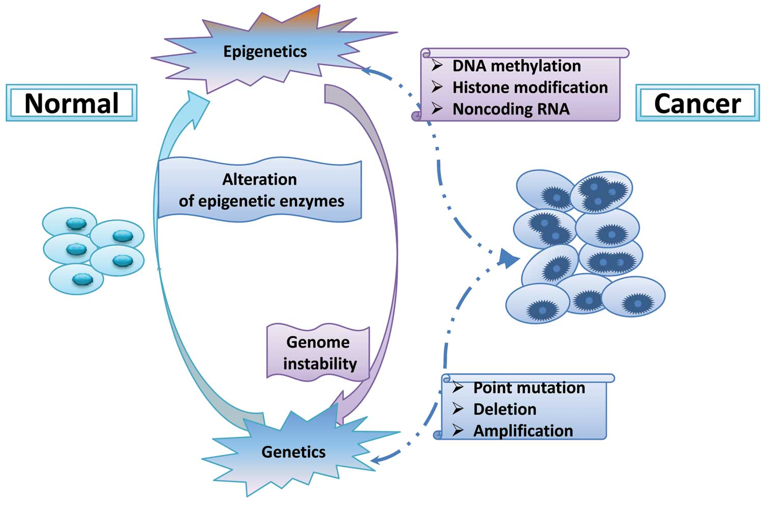 Oncology ReportsEpigenetic regulation and cancer (Review)