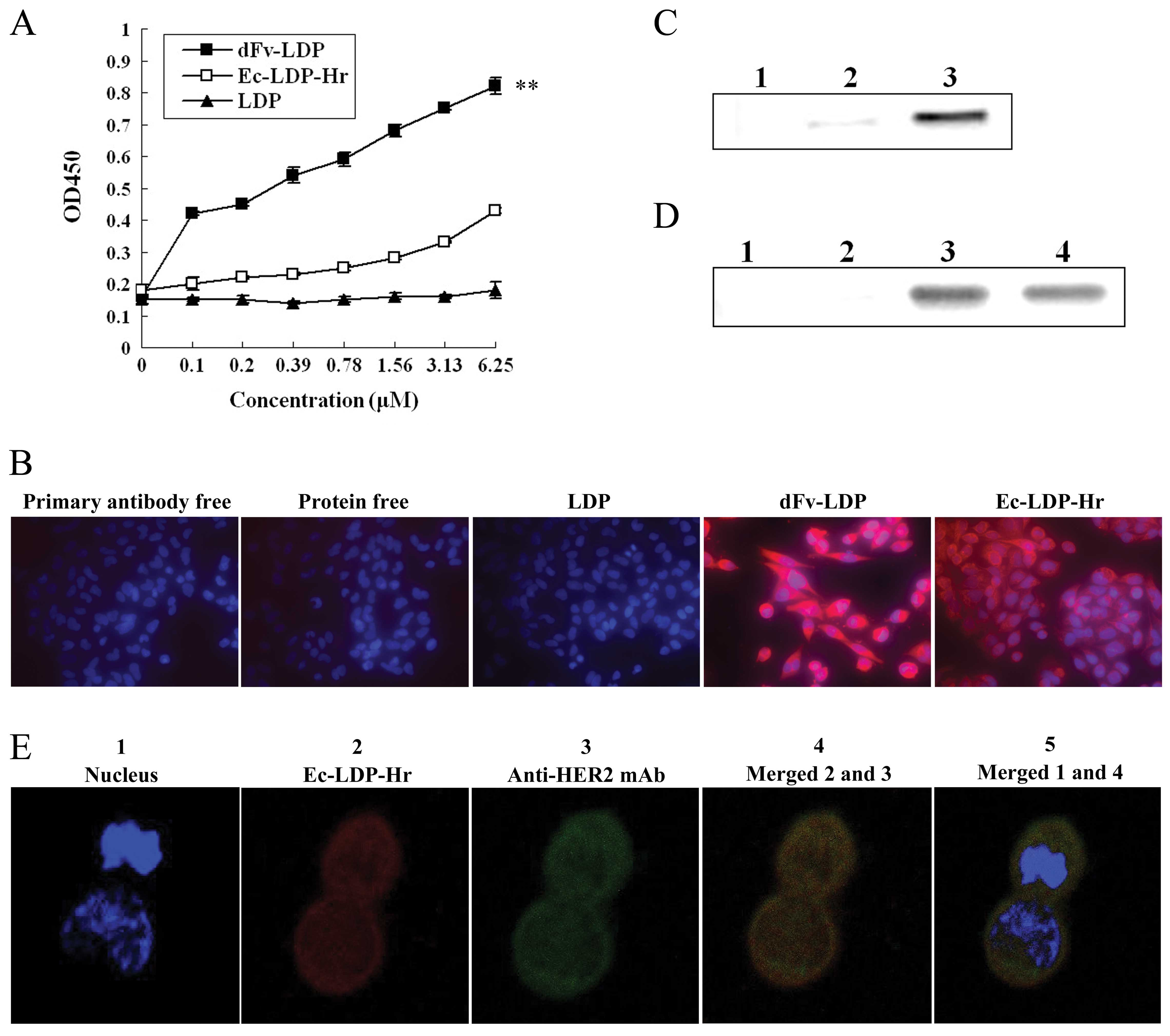 Mmp 2 9 Oriented Combinations Enhance Antitumor Efficacy