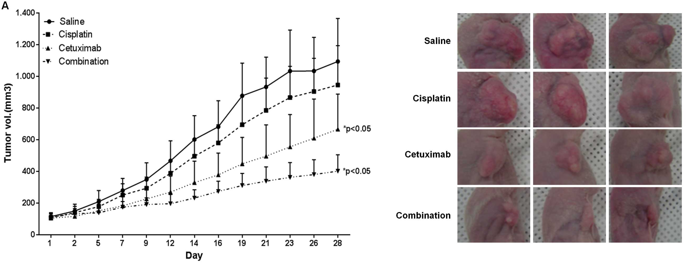 Solanum Incanum Extract Downregulates Aldehyde