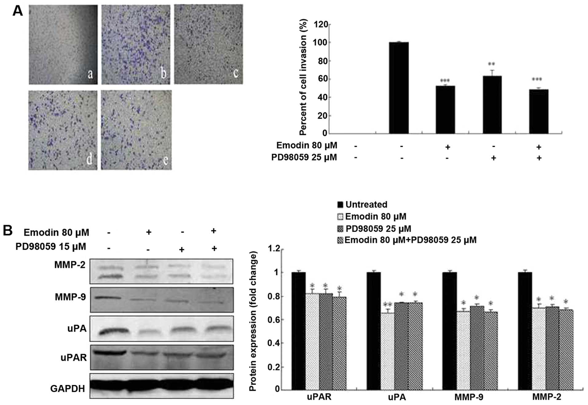 (B) MDA-MB-231 cells were treated with or without 80 μM emodin, 25 μM  PD98059 and 80 μM emodin plus 25 μM PD98059 for 24 h. The proteins were  analyzed by ...