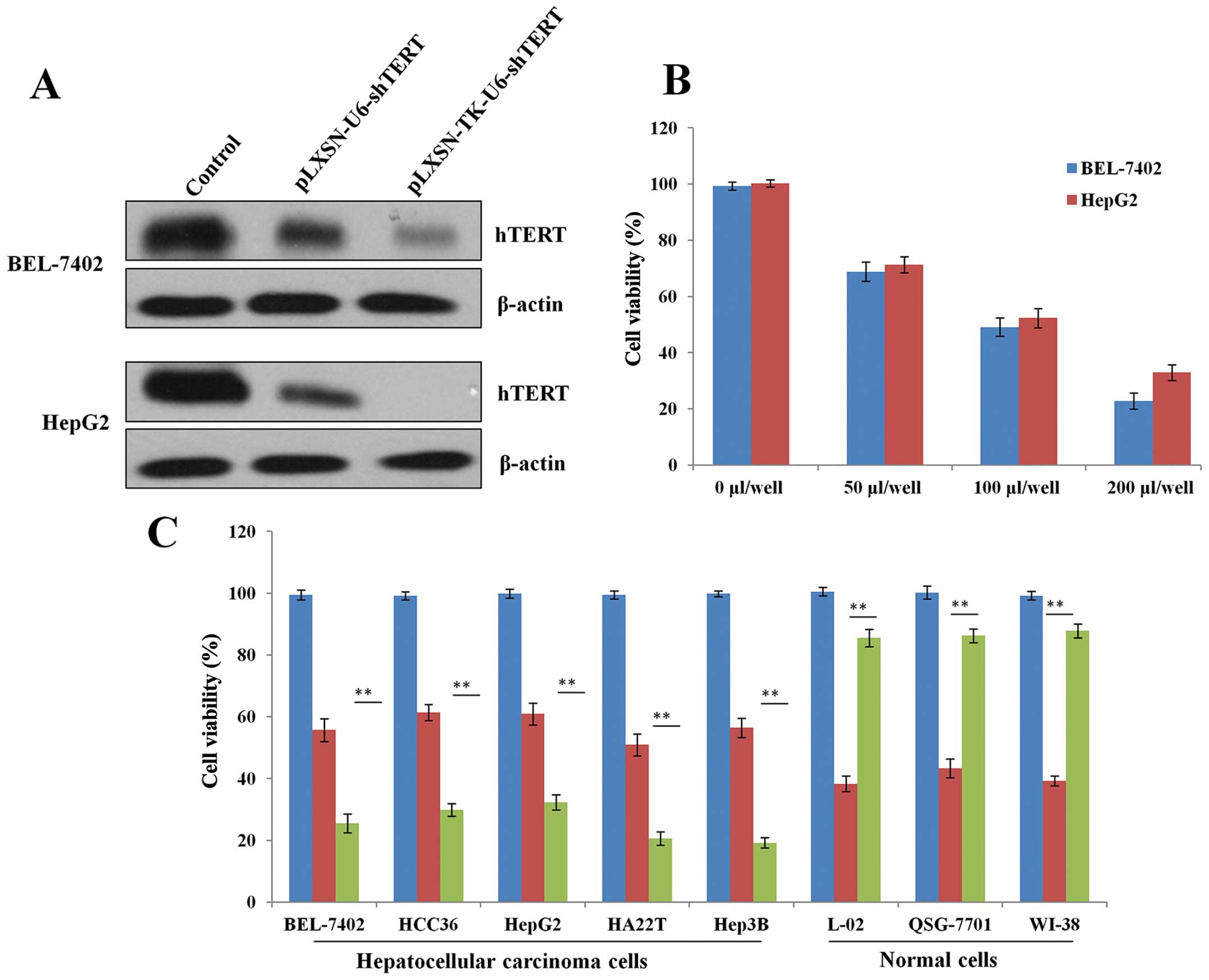 The MR suppresses HCC cell colony formation in vitro and