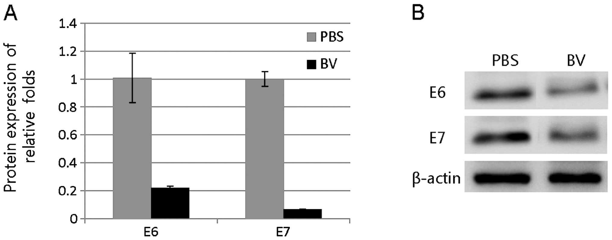 bee venom in cancer therapy pdf