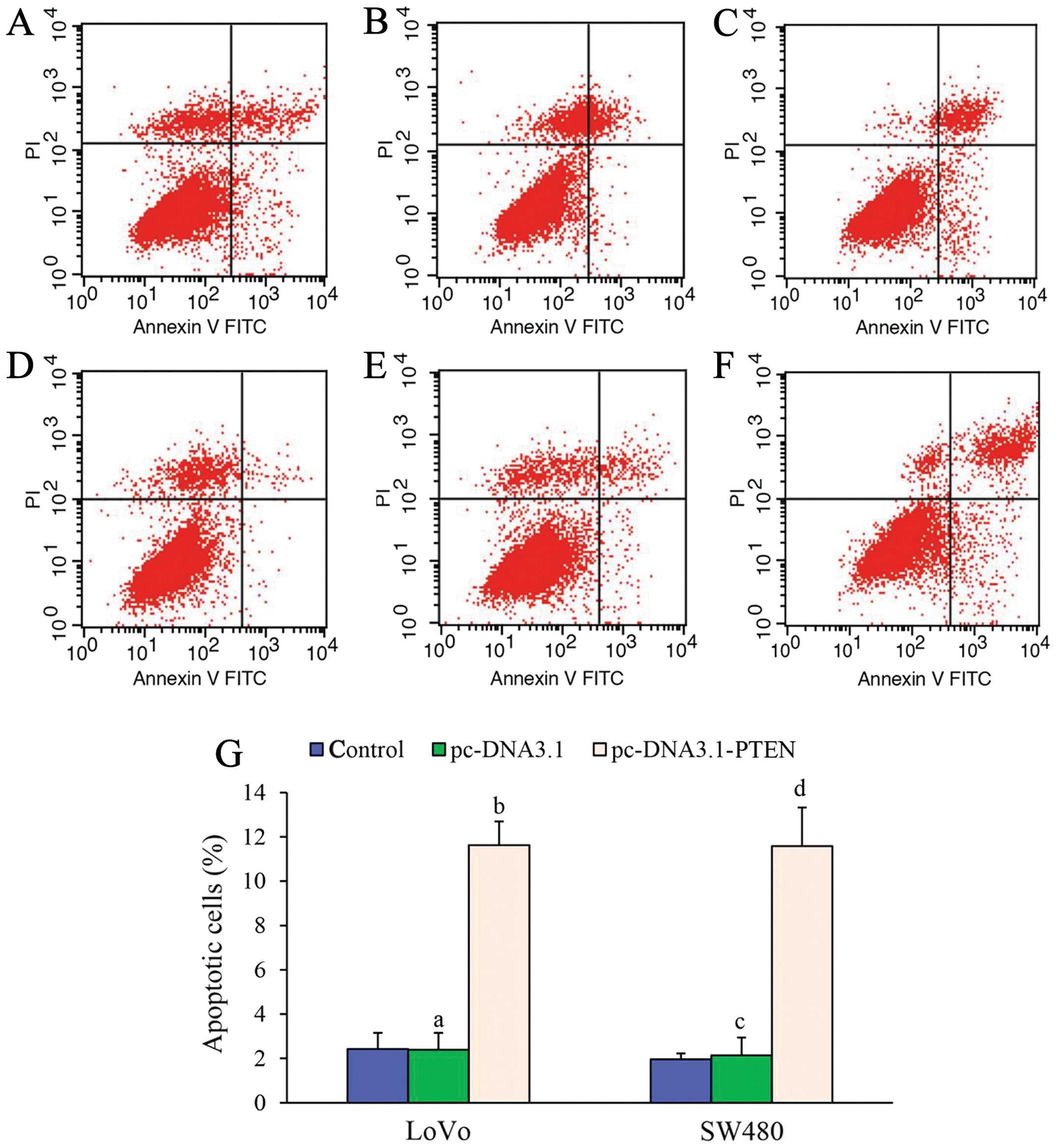 Effects Of Pten On The Proliferation And Apoptosis Of Colorectal Cancer Cells Via The Phosphoinositol 3 Kinase Akt Pathway