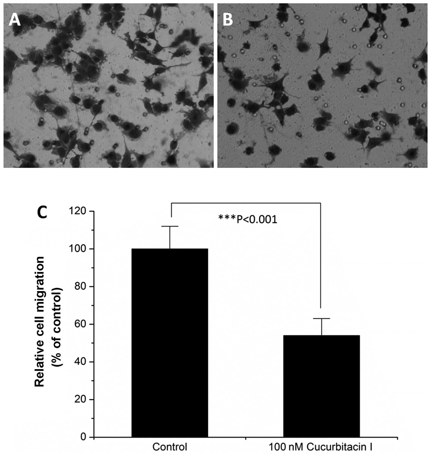 Cucurbitacin I inhibits cell migration and invasion and