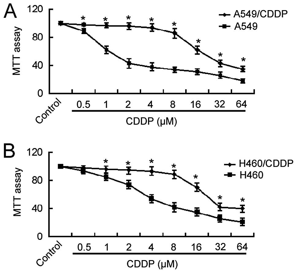 Matrine Induces Mitochondrial Apoptosis In Cisplatinresistant Non Series Parallel Diagram Cddp Resistant A A549 And B H460 Cells Their Parental Were Treated With Of Concentrations For 48 H Cell Viability Was