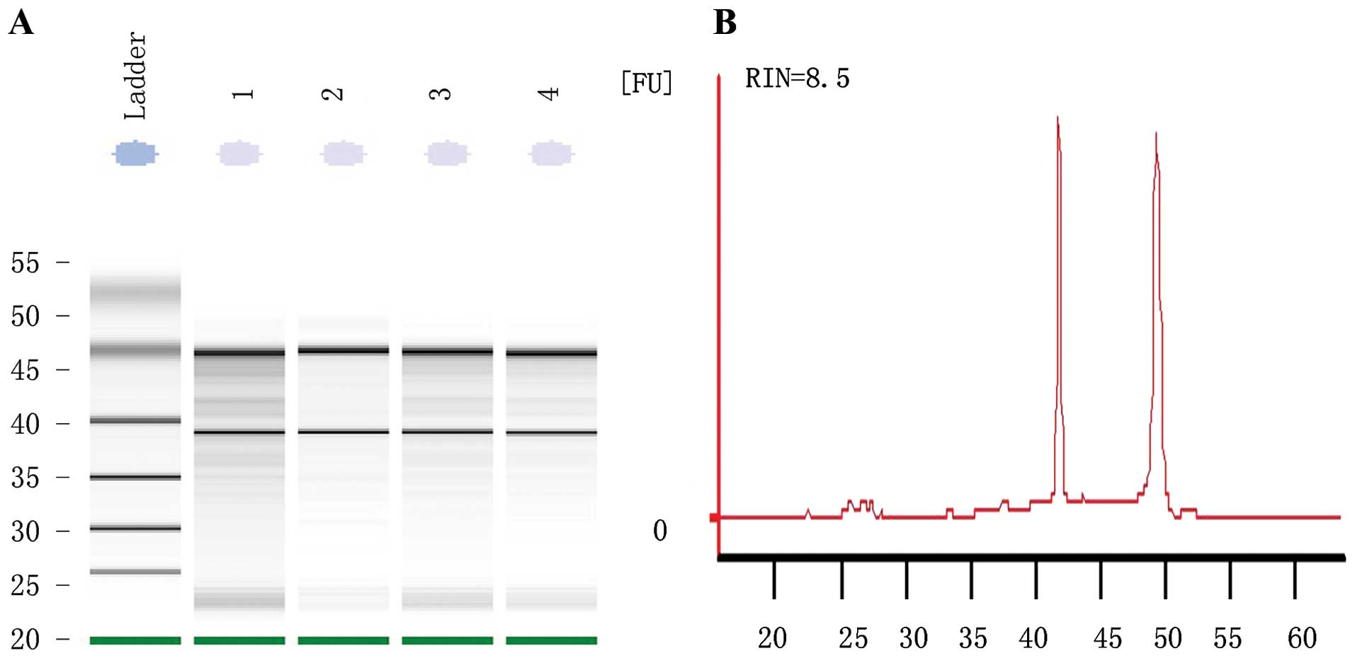 Oncology ReportsKnockdown of microRNA-1323 restores sensitivity to radiation by suppression of PRKDC activity in radiation-resistant lung cancer cells