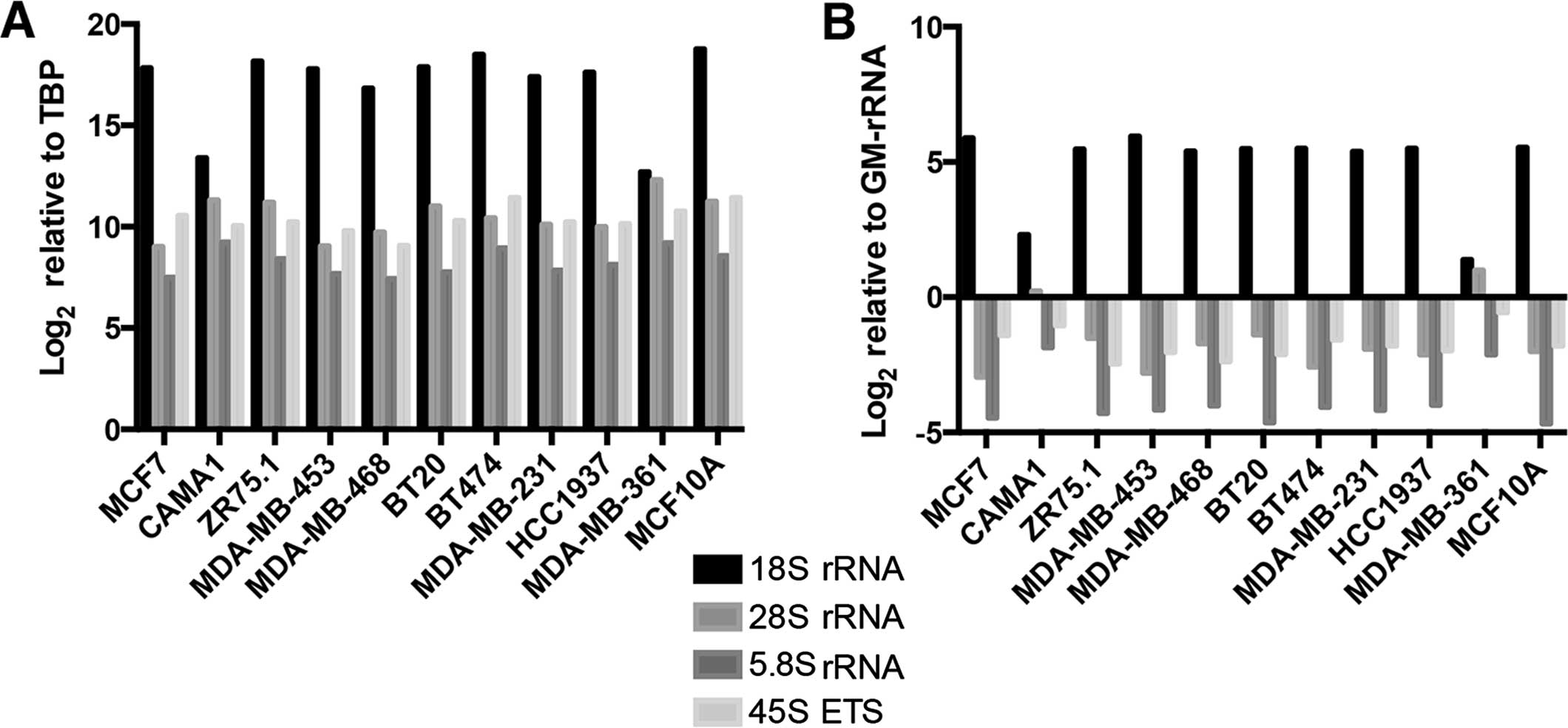 rRNA transcript levels in breast cancer cell lines (A) Relative expression  levels of rRNA transcripts in the breast cancer cell line panel, normalized  to ...