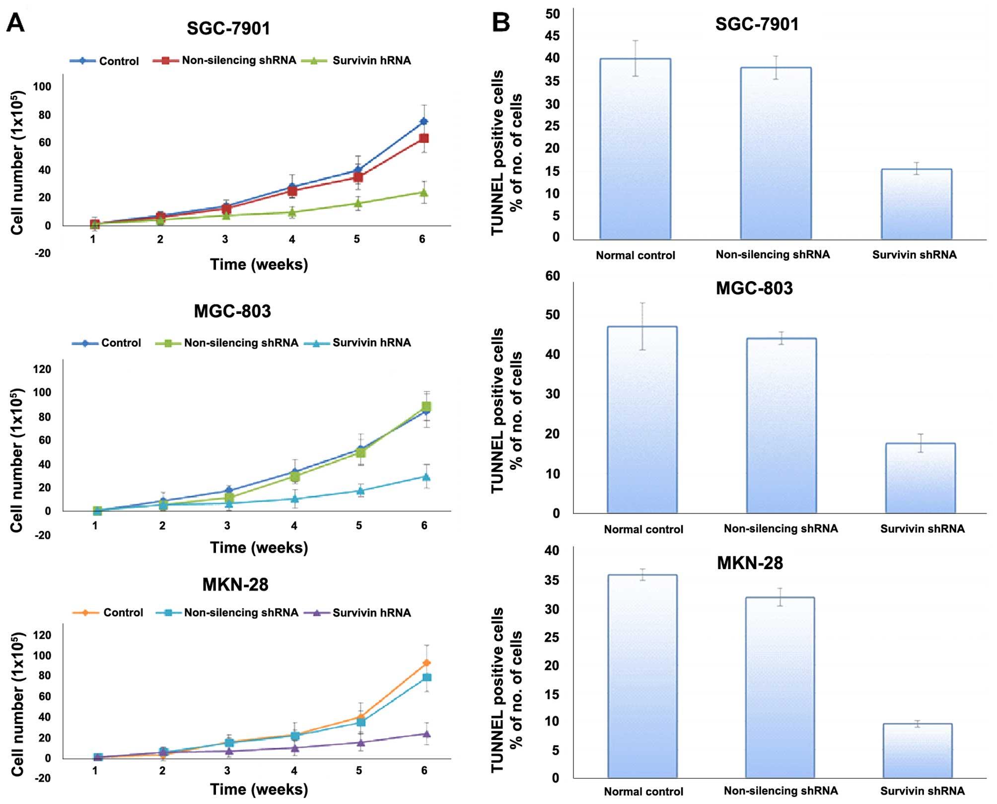 Lentiviral vector-mediated survivin shRNA delivery in