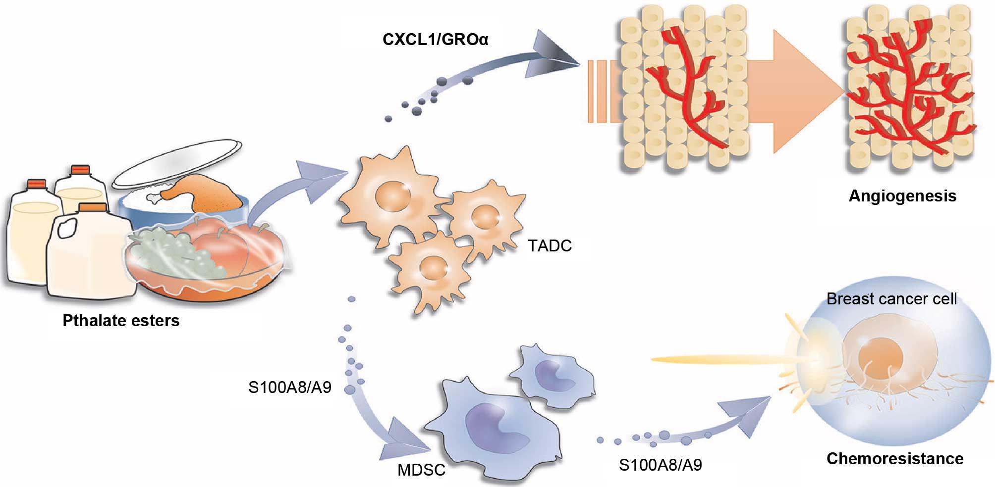 Cyclophosphamide Chemotherapy Regimens