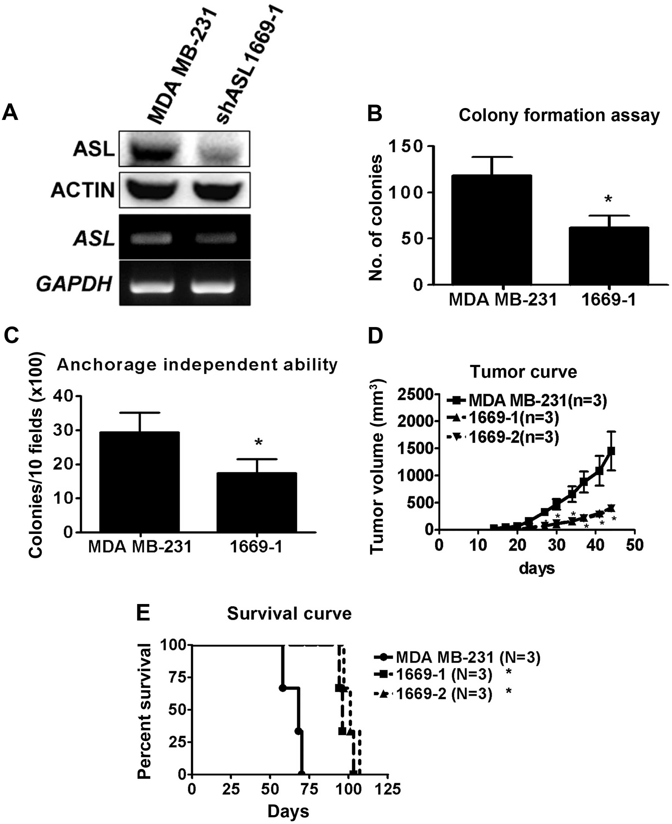 Argininosuccinate Lyase Is A Potential Therapeutic Target In Breast Ass 5 Plastic Parts Mm Reverse Locking Circuit Board Support Figure 2 Asl Shrna Inhibits Cancer Cell Growth Vitro And Vivo Mrna Protein Expression The Knockdown Transfectants Was