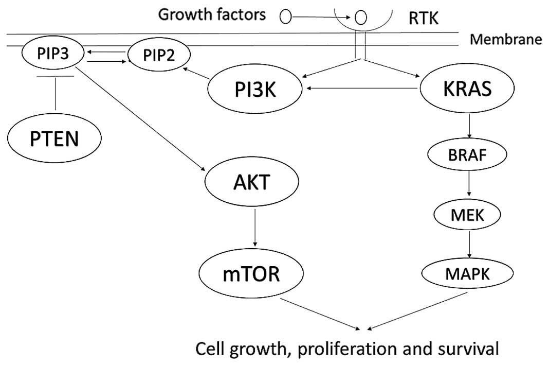 ARID1A gene mutation in ovarian and endometrial cancers