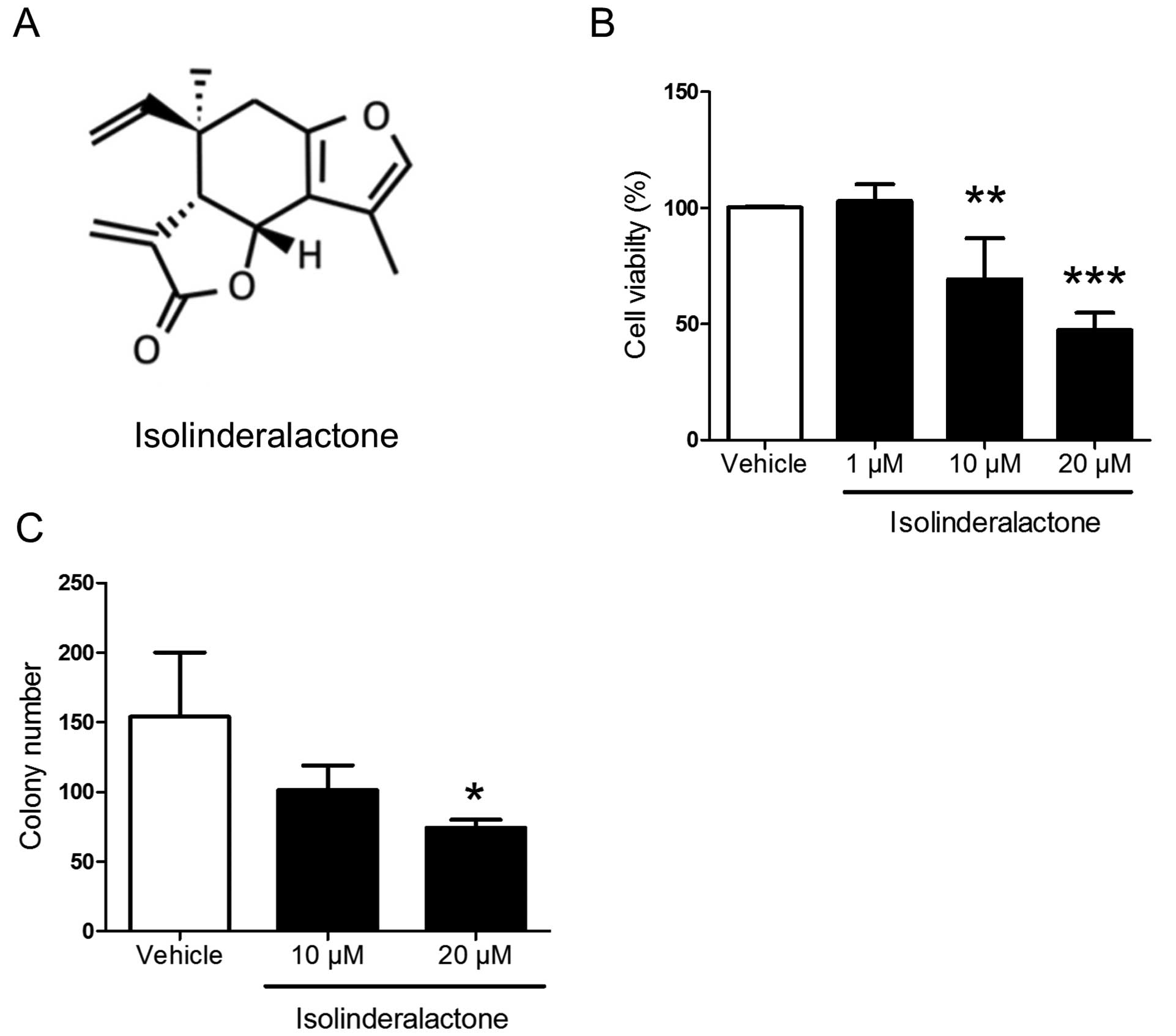 Isolinderalactone treatment inhibits breast cancer cell growth and colony  formation. The MDA-MB-231 cells were treated with vehicle (0.1% DMSO) and  ...