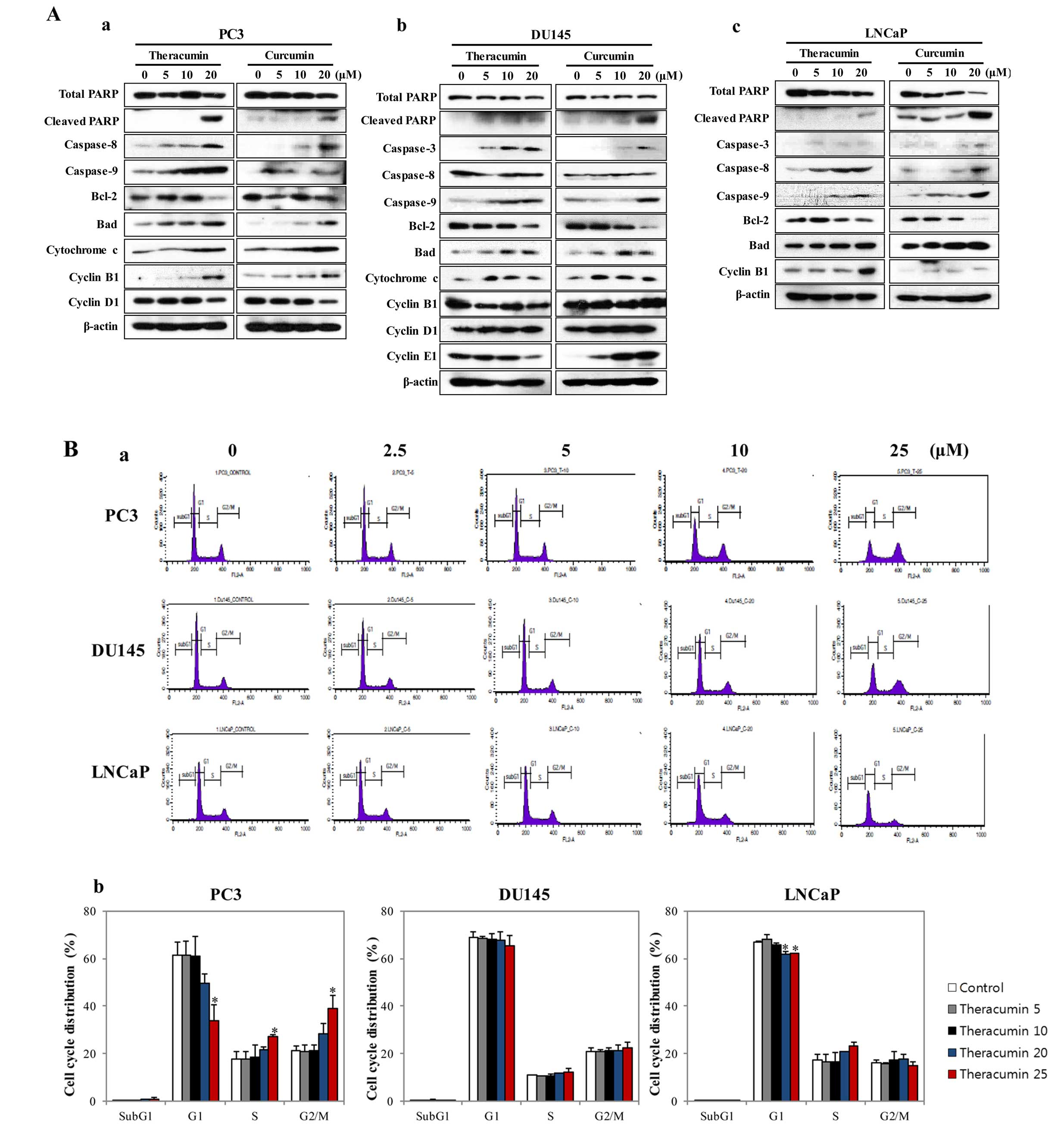 Theracurmin Efficiently Inhibits The Growth Of Human Prostate And Bladder Cancer Cells Via Induction Of Apoptotic Cell Death And Cell Cycle Arrest