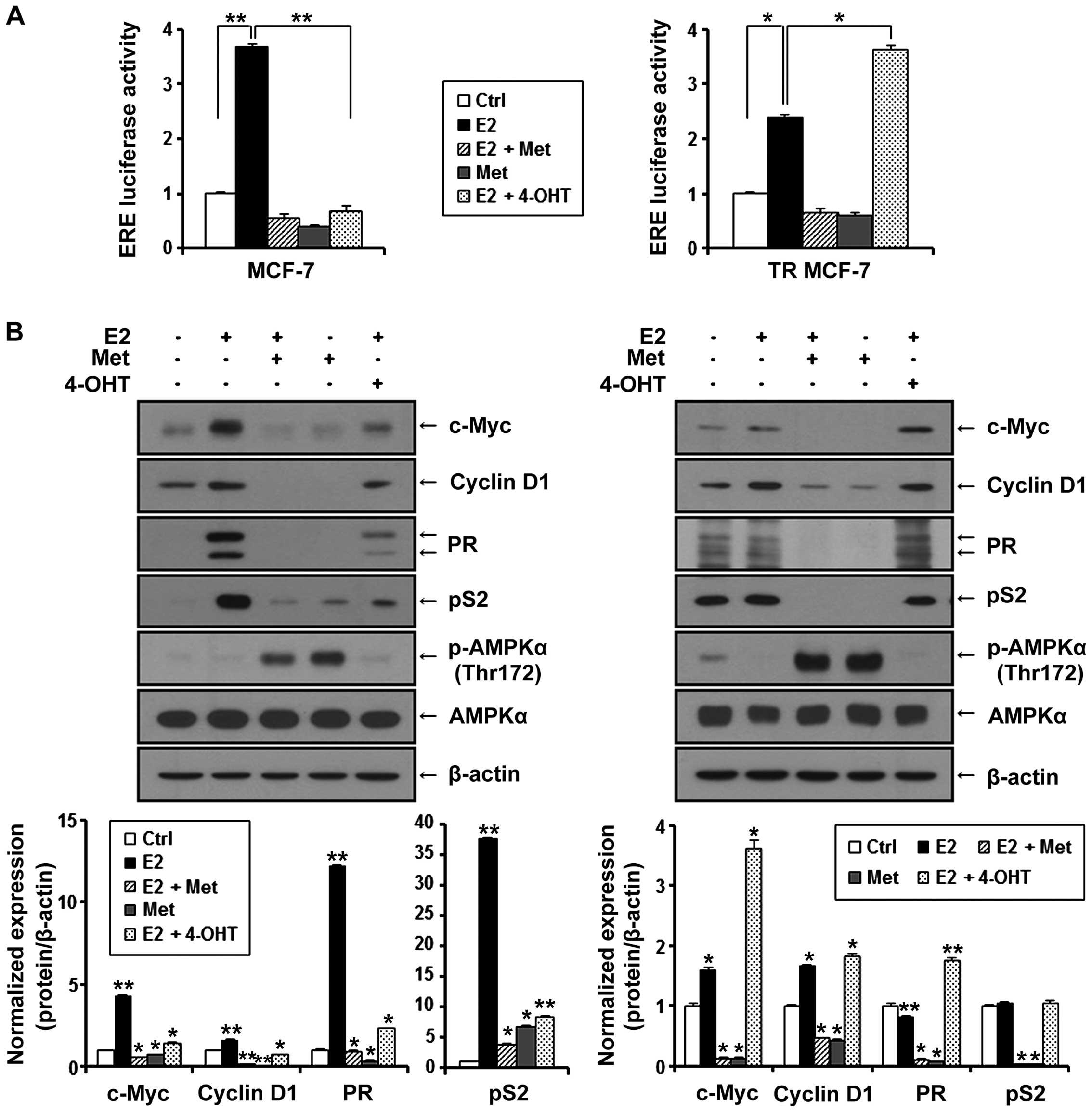 estrogen receptor assay positive