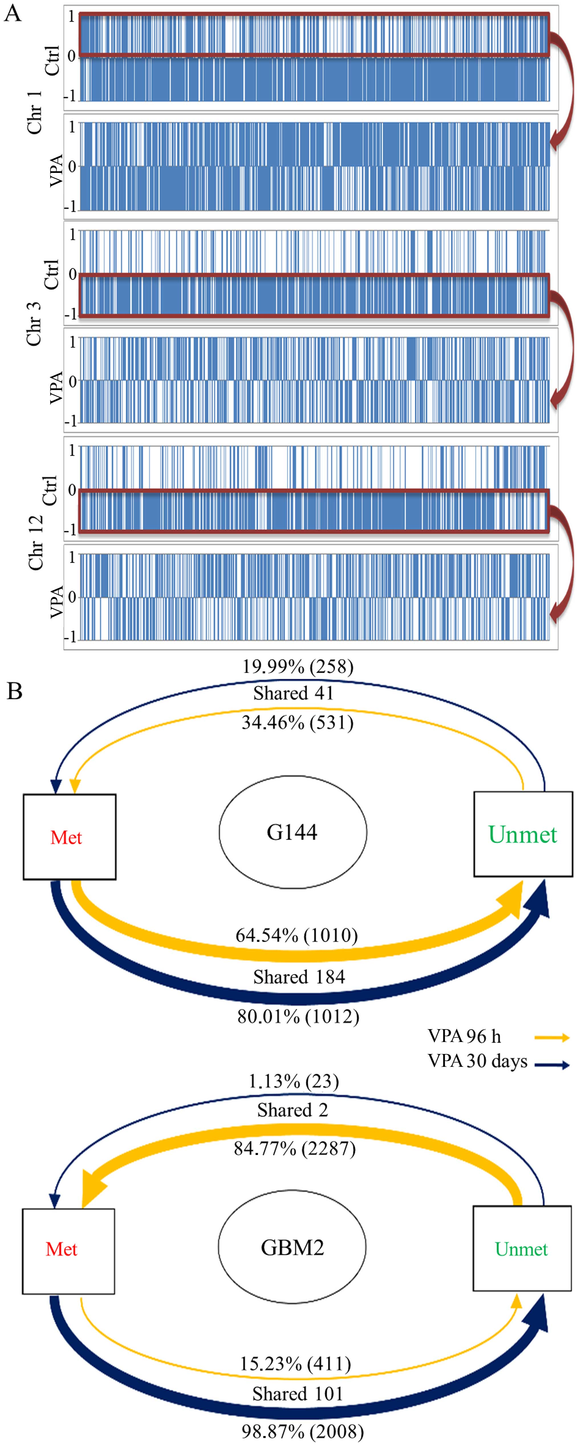 Epigenetic targeting of glioma stem cells: Short-term and long-term ...