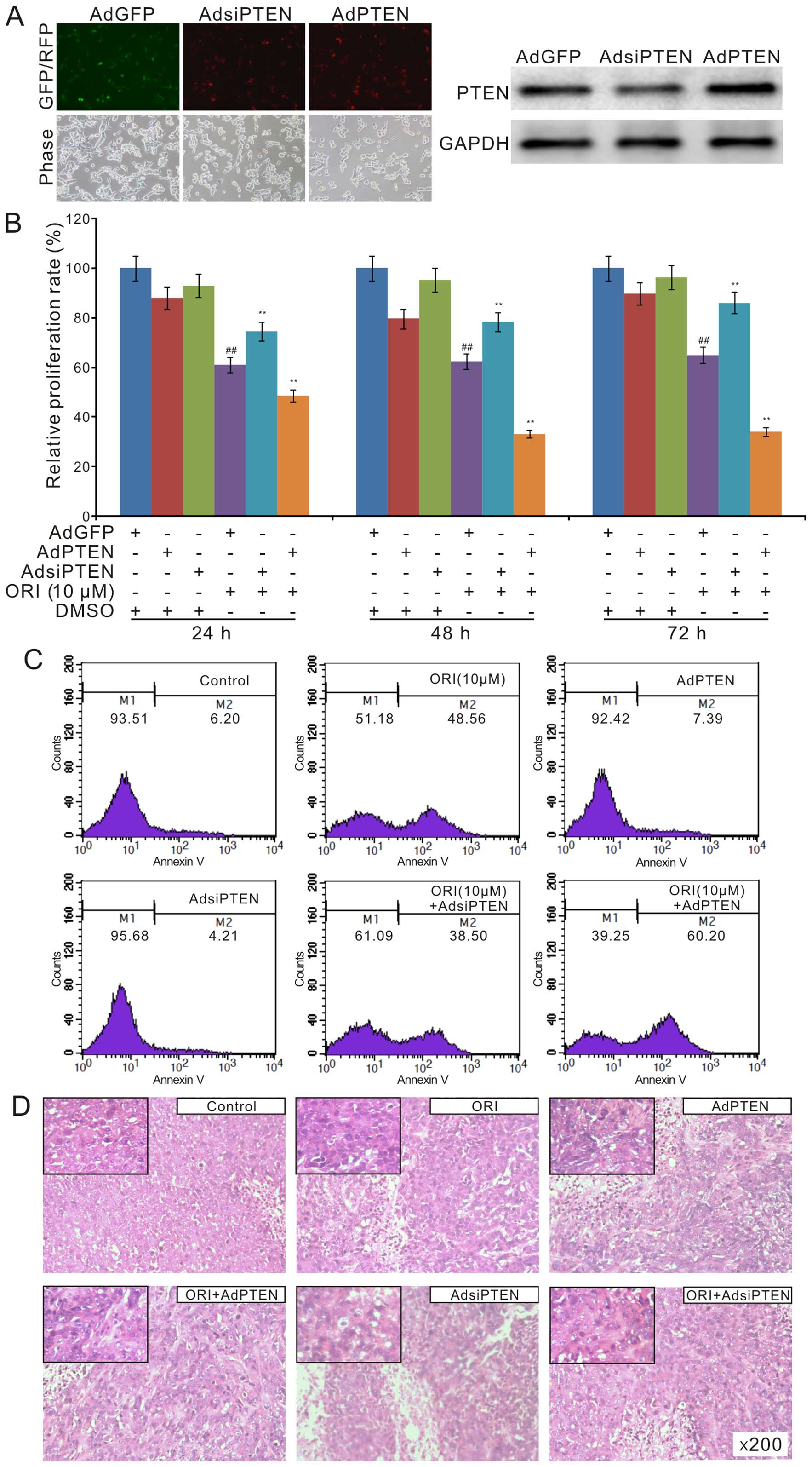 Oridonin Upregulates Pten Through Activating P38 Mapk And Inhibits Proliferation In Human Colon Cancer Cells