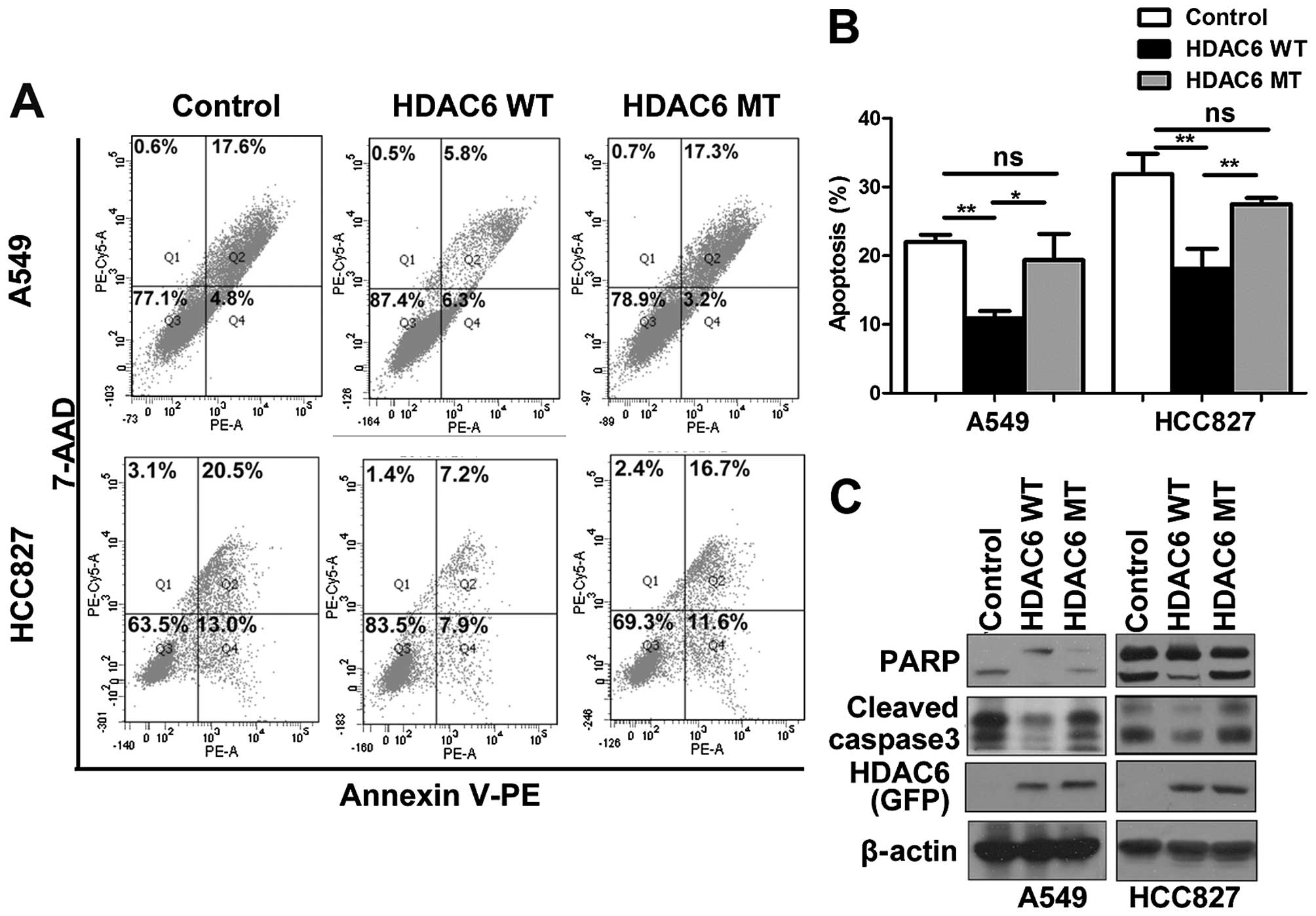 hdac6 promotes cell proliferation and confers resistance