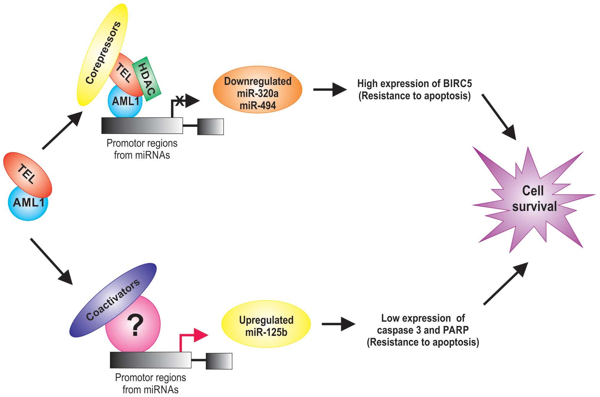 Acute lymphoblastic leukemia effect on the developmental process