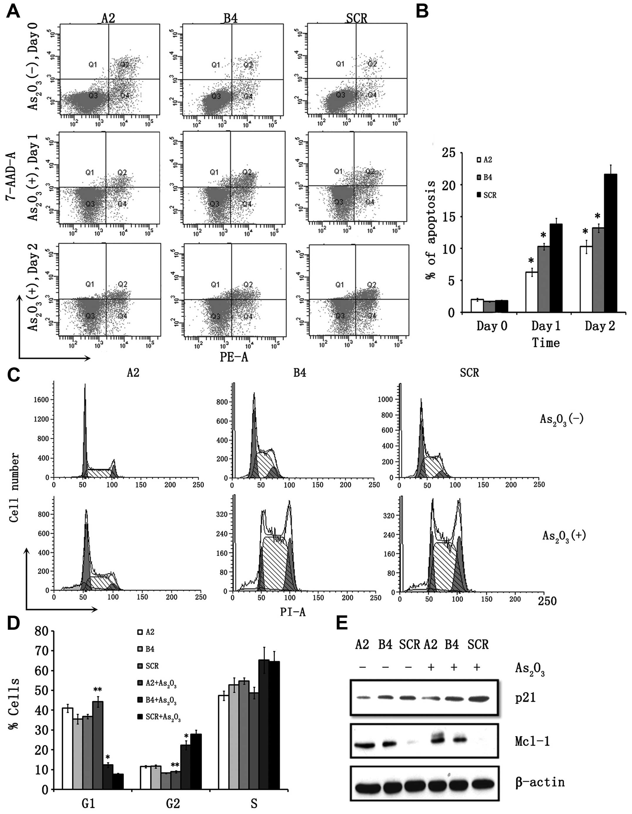 RUNX3 plays an important role in As2O3‑induced apoptosis and