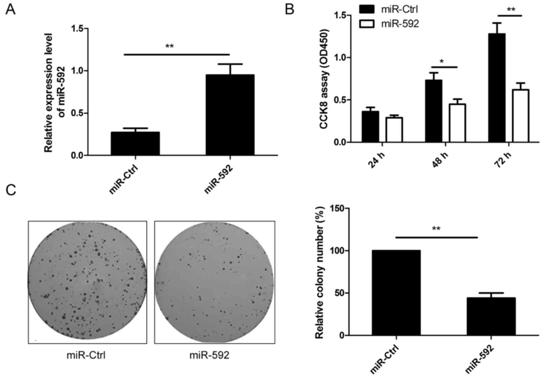 Mir 592 Functions As A Tumor Suppressor In Human Non Small Cell Lung