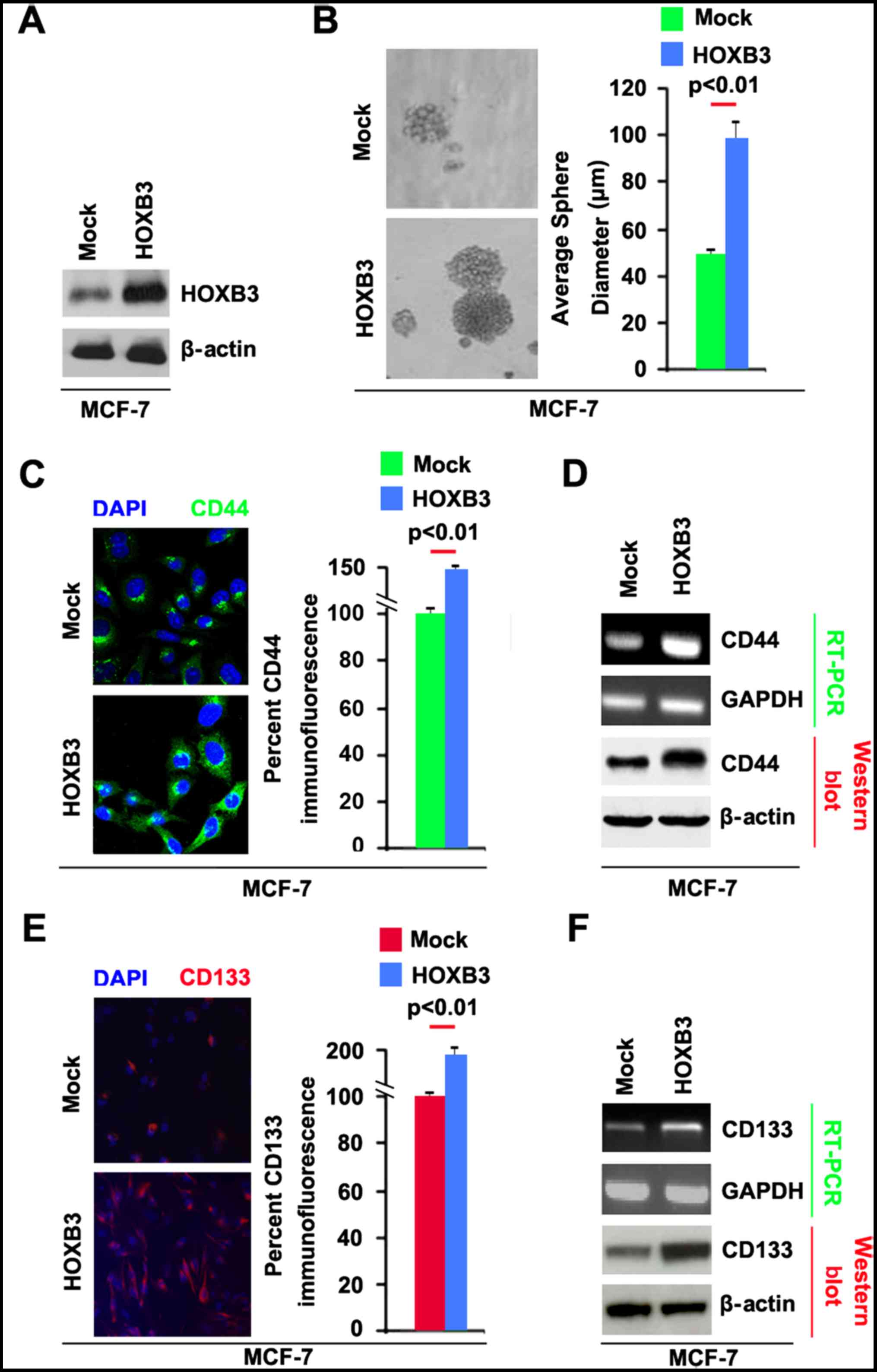 miR-375 inhibits cancer stem cell phenotype and tamoxifen