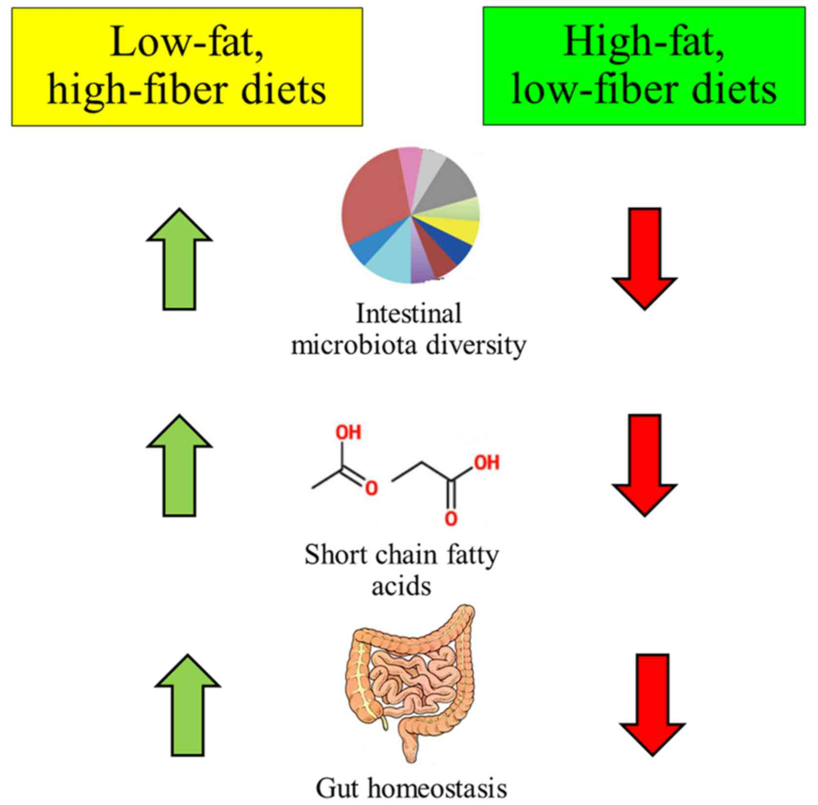the use of the very low calorie diets in obese individuals The konjac foods - the very low calorie diets what is a very-low-calorie diet (vlcd) who should use a vlcd health benefits of a vlcd.