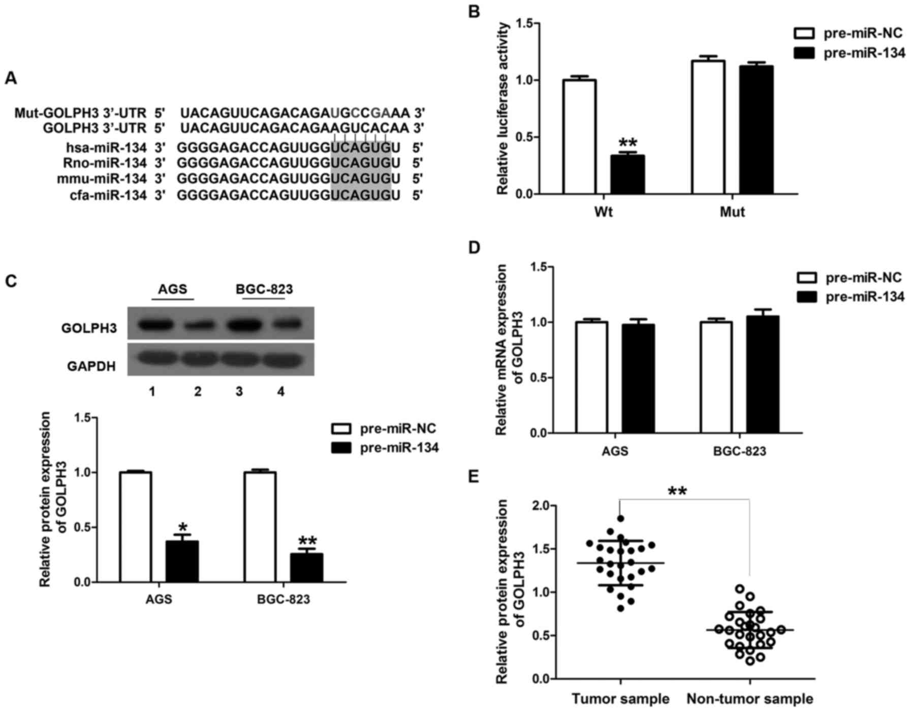 TRIM52 promotes cell proliferation and suppresses cell