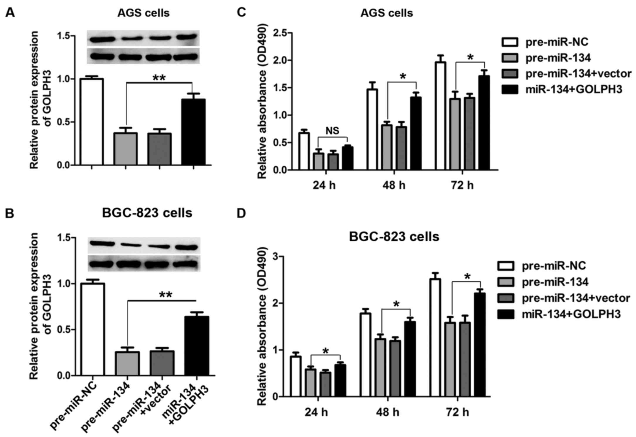 MicroRNA-134 suppresses cell proliferation in gastric