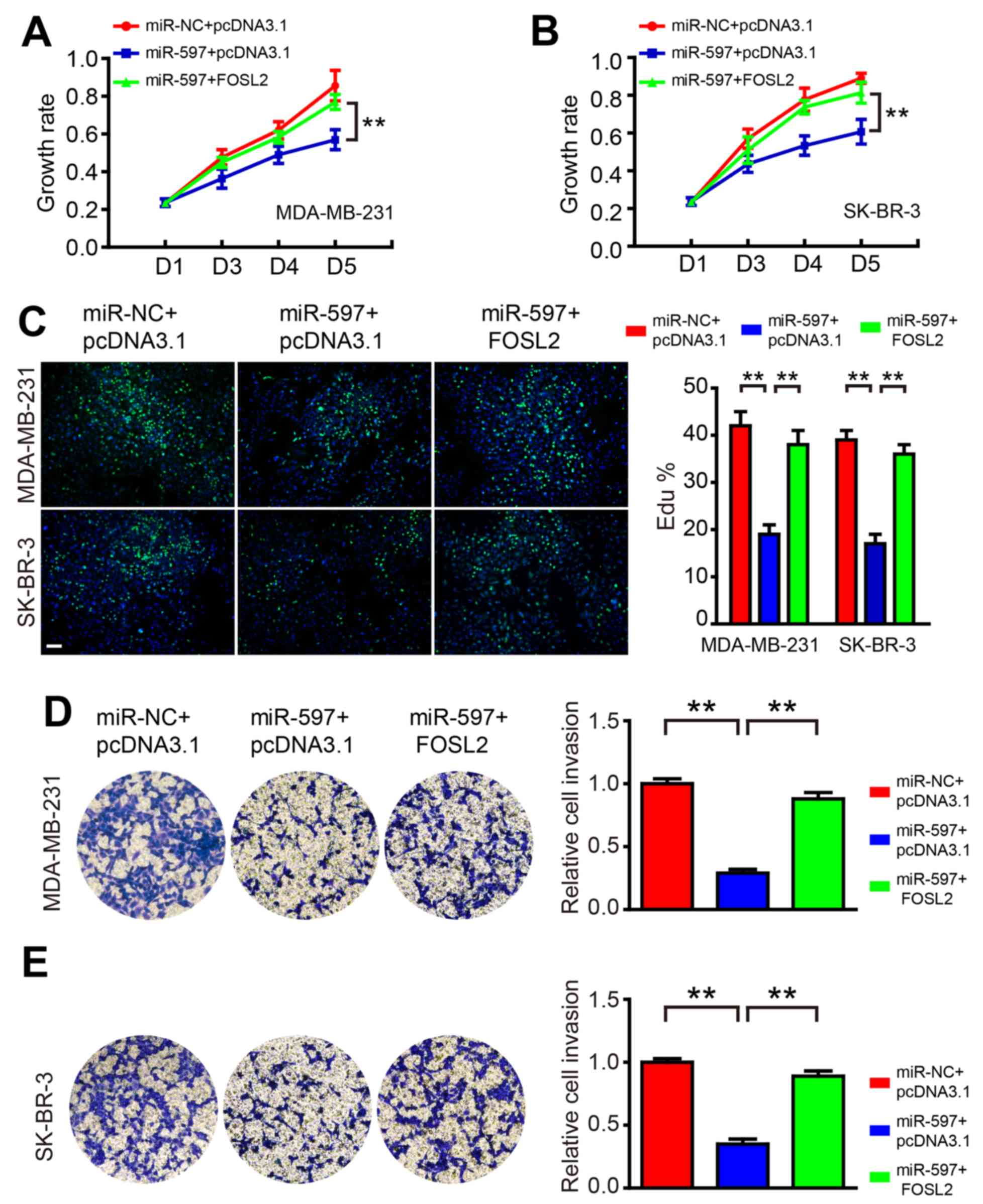 Mir 597 Inhibits Breast Cancer Cell Proliferation Migration And H 263 Block Diagram Overexpression Of Fosl2 Blocks The Roles A B Growth Rate Was Promoted By In Overexpressing Cells