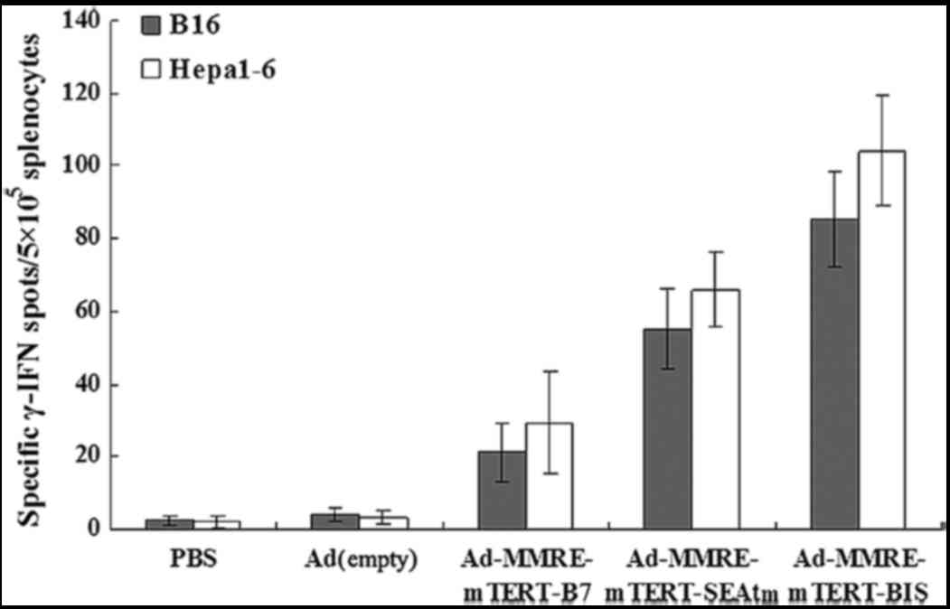Recombinant Adenovirus Of Sea And Cd80 Genes Driven By Mmre