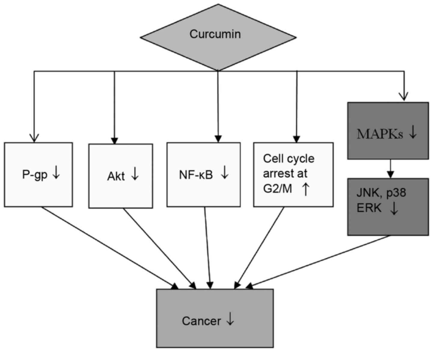 Preclinical Studies For The Combination Of Paclitaxel And Curcumin In Cancer Therapy Review