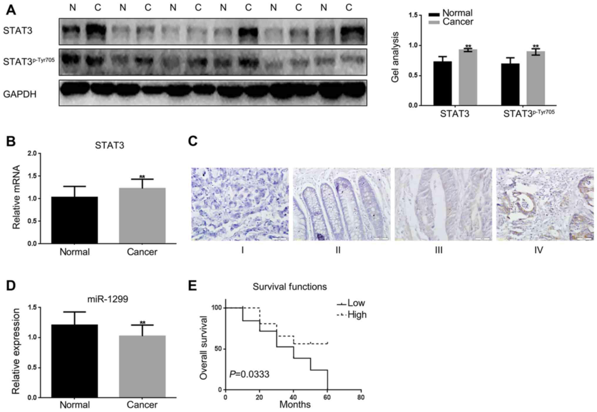 Microrna 1299 Is A Negative Regulator Of Stat3 In Colon Cancer