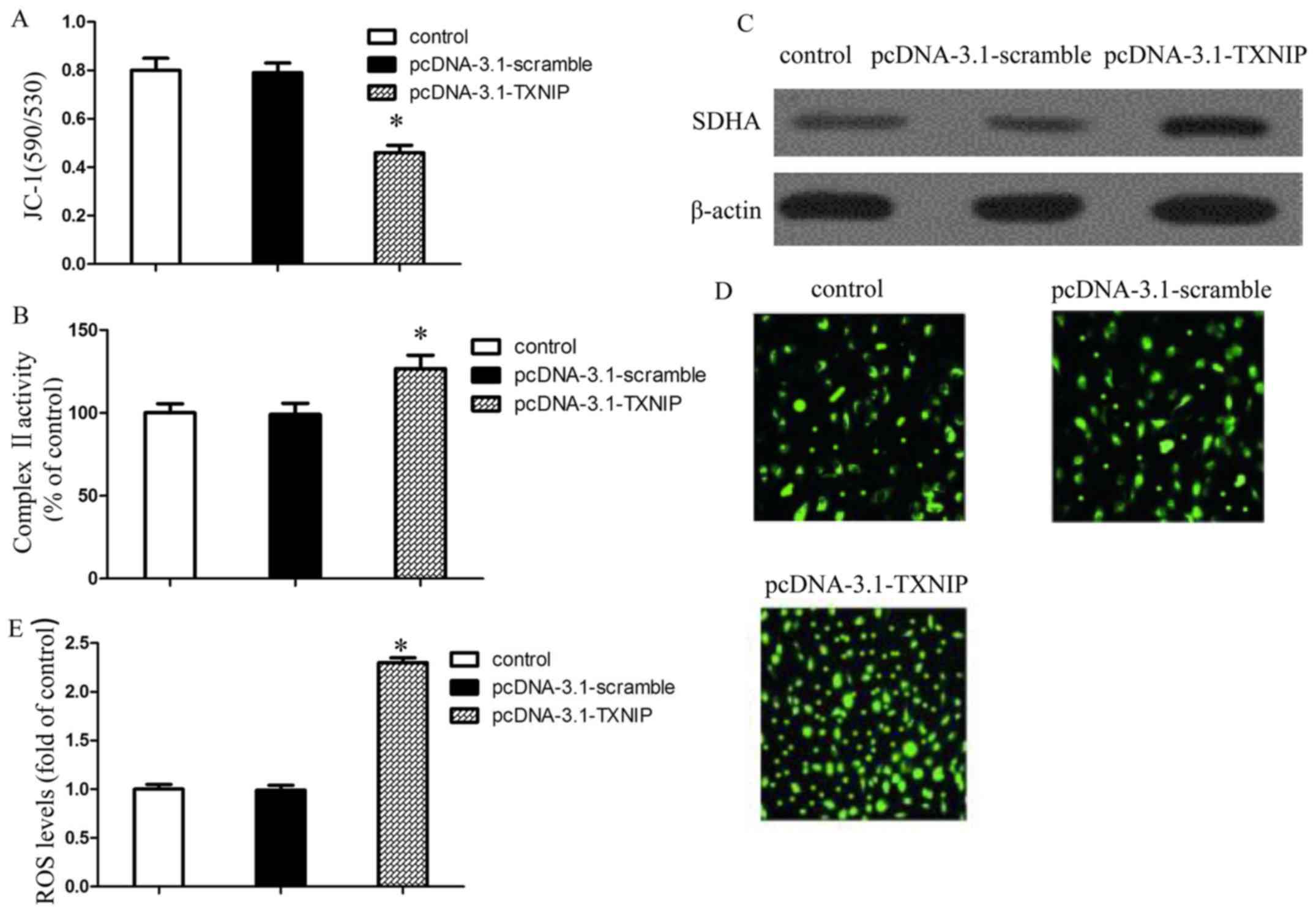 TXNIP overexpression suppresses proliferation and induces