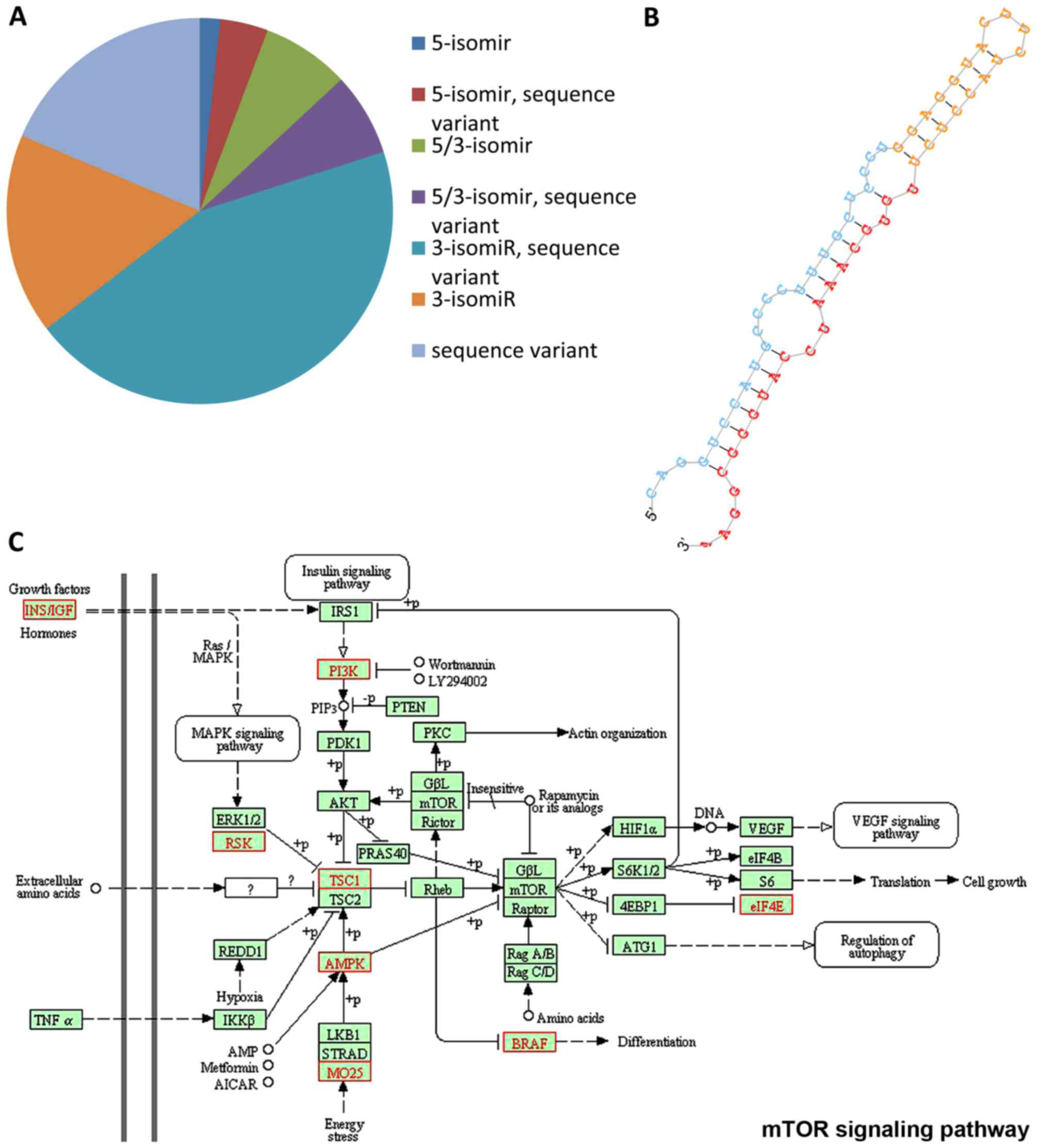 A sketch of known and novel MYCN-associated miRNA networks in ...