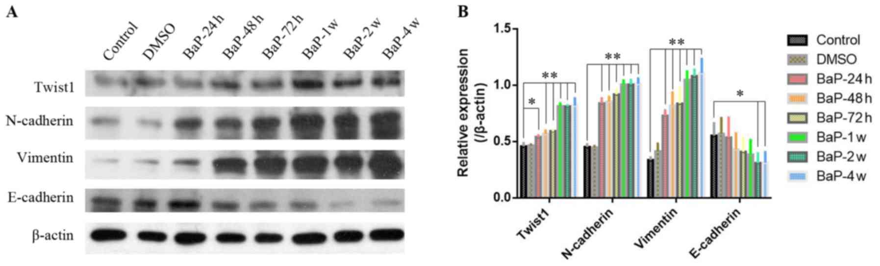 Benzo(a)pyrene enhances the EMT-associated migration of lung